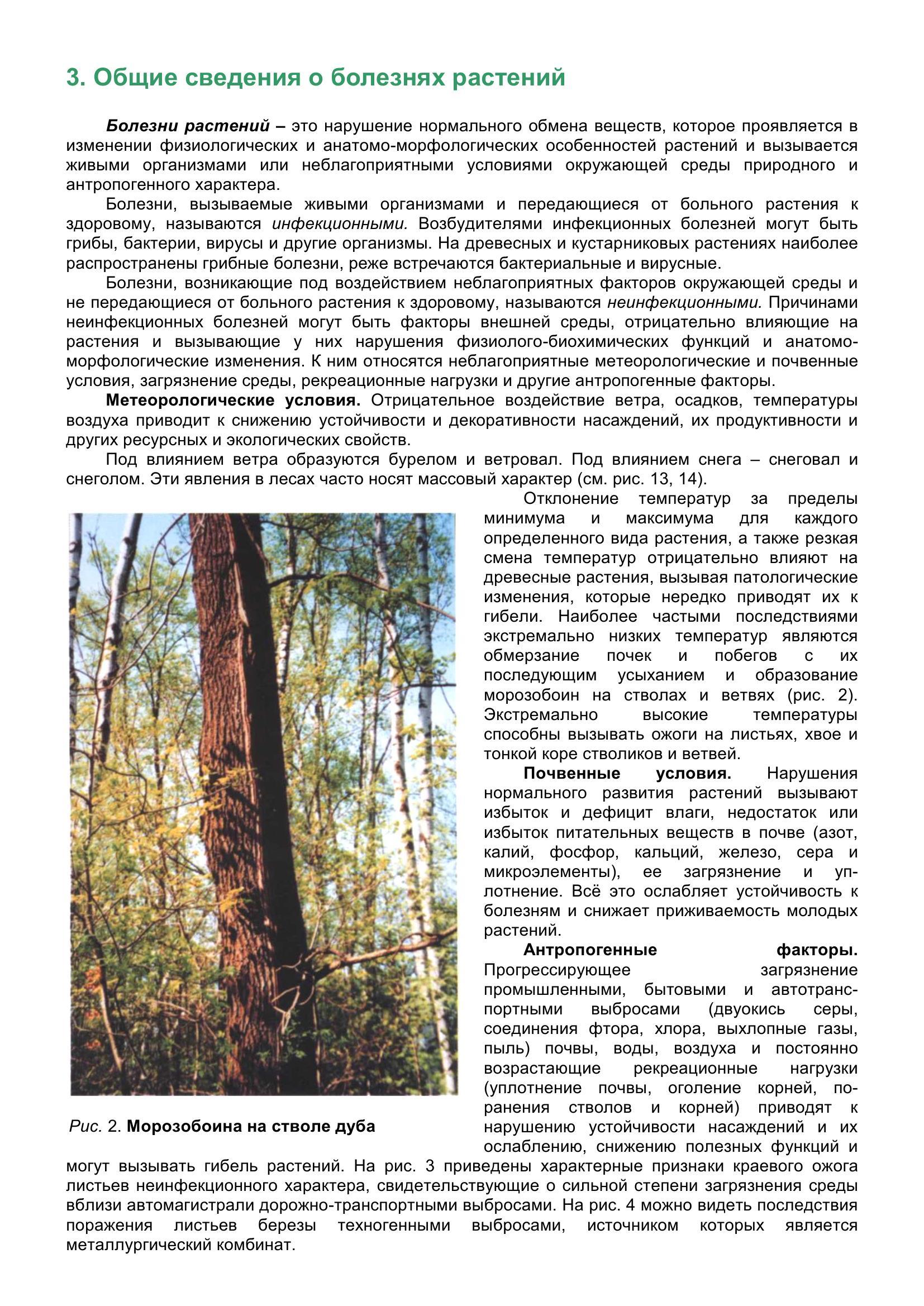 Болезни_древесных_растений_012.jpg