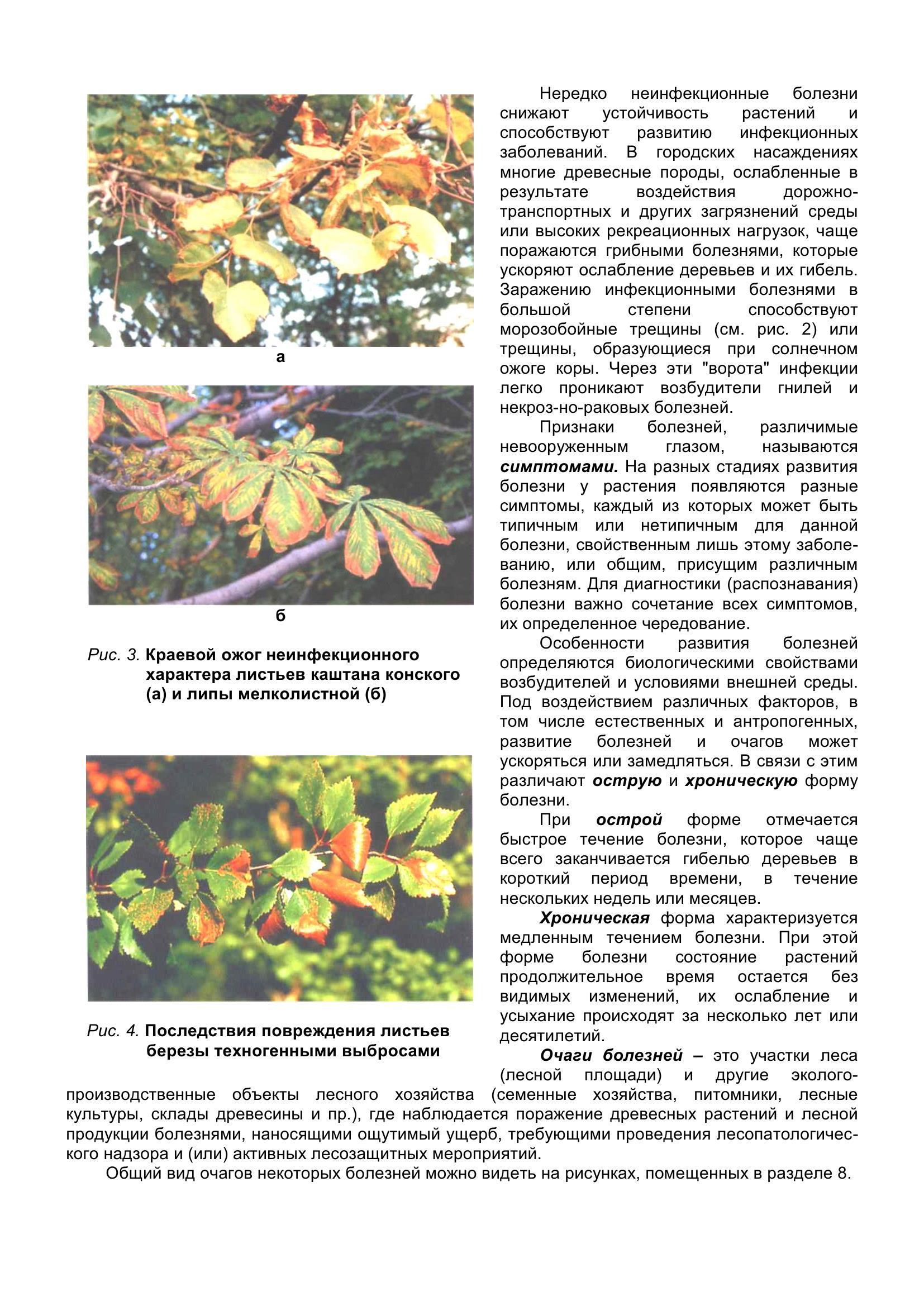 Болезни_древесных_растений_013.jpg