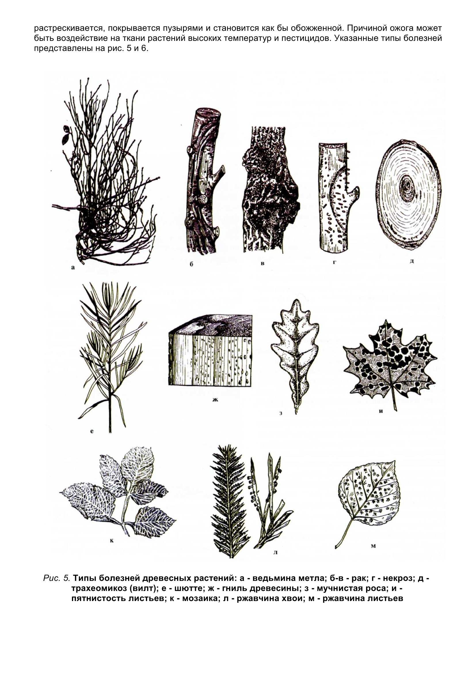 Болезни_древесных_растений_015.jpg
