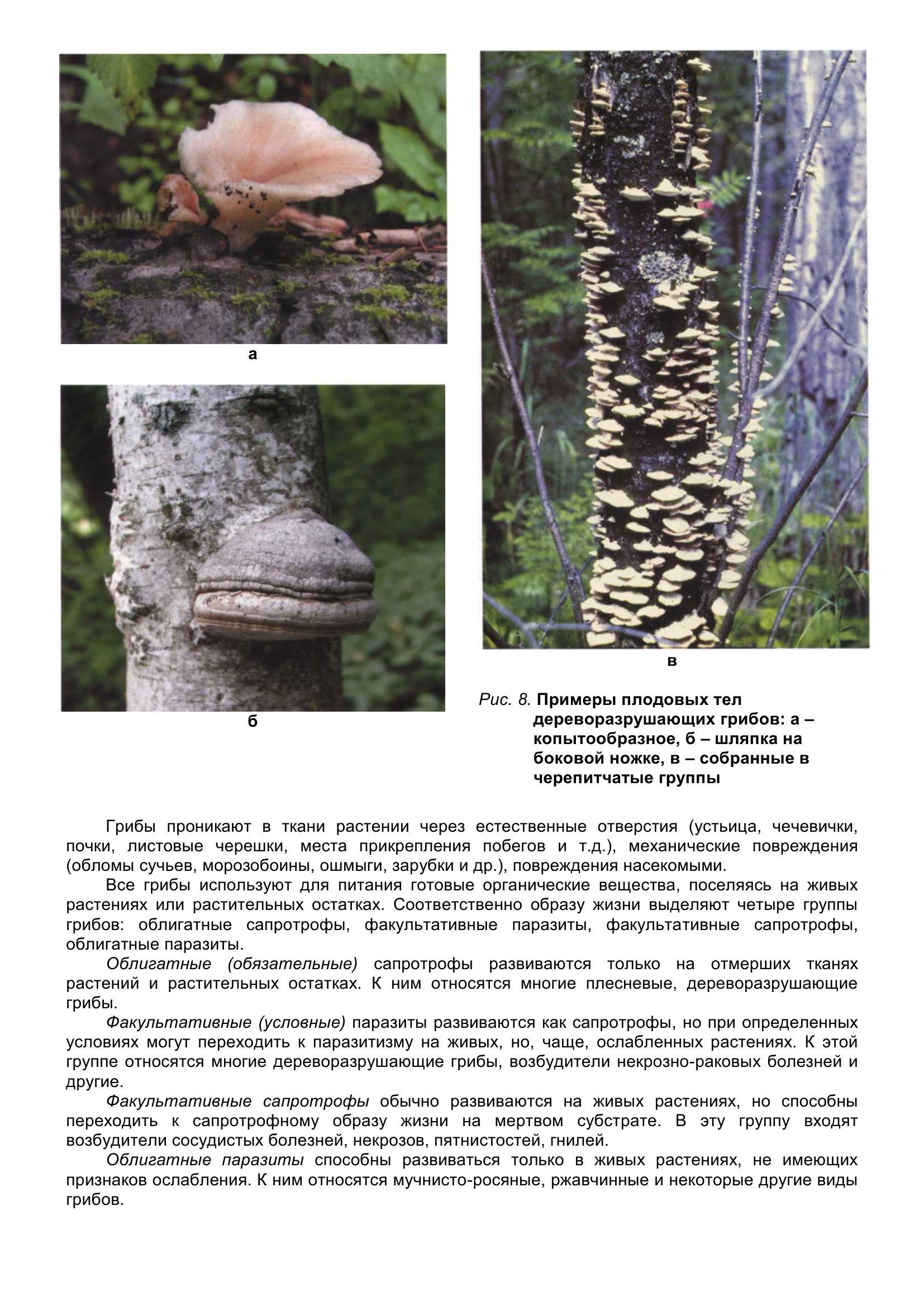 Болезни_древесных_растений_019.jpg