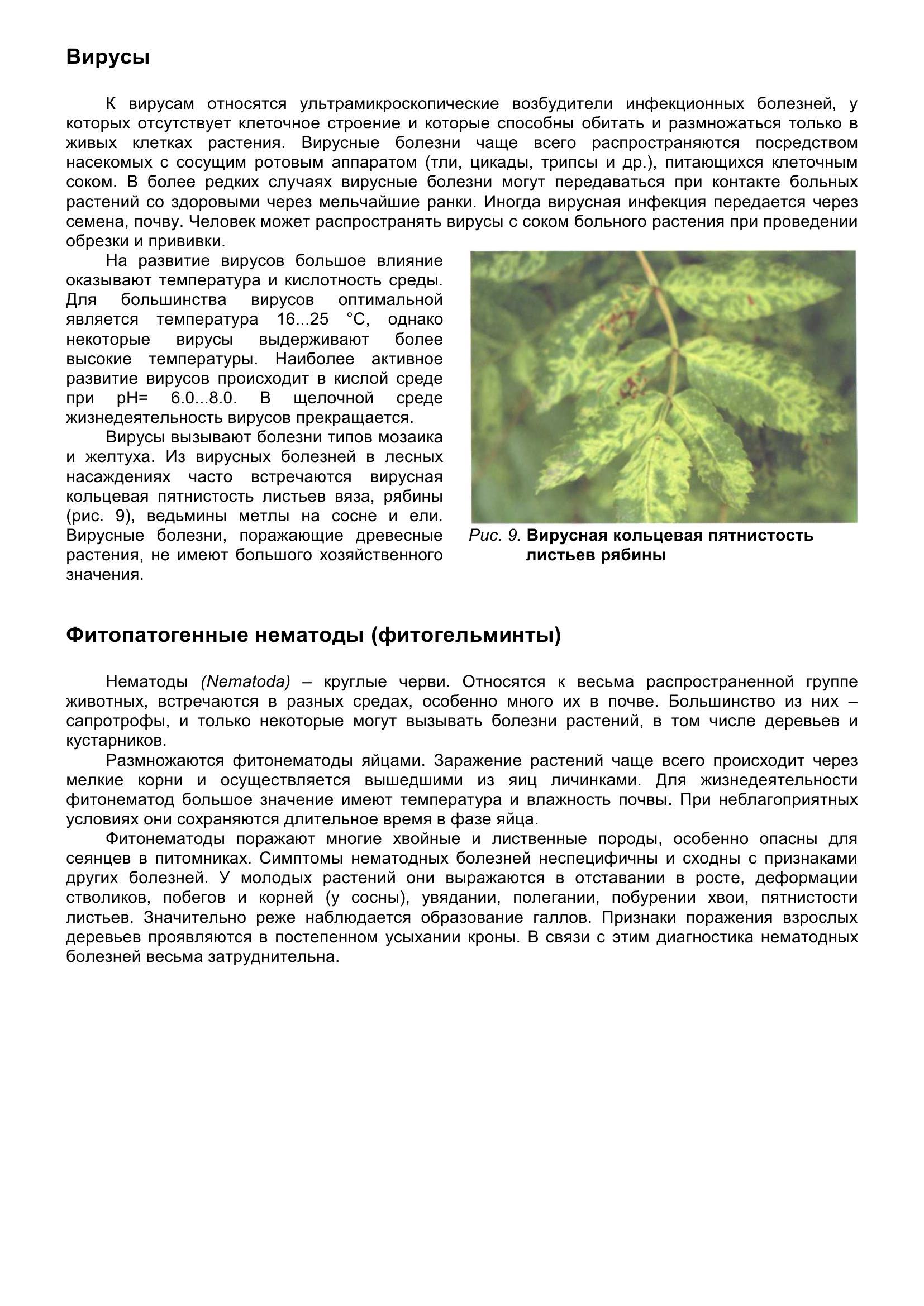 Болезни_древесных_растений_021.jpg