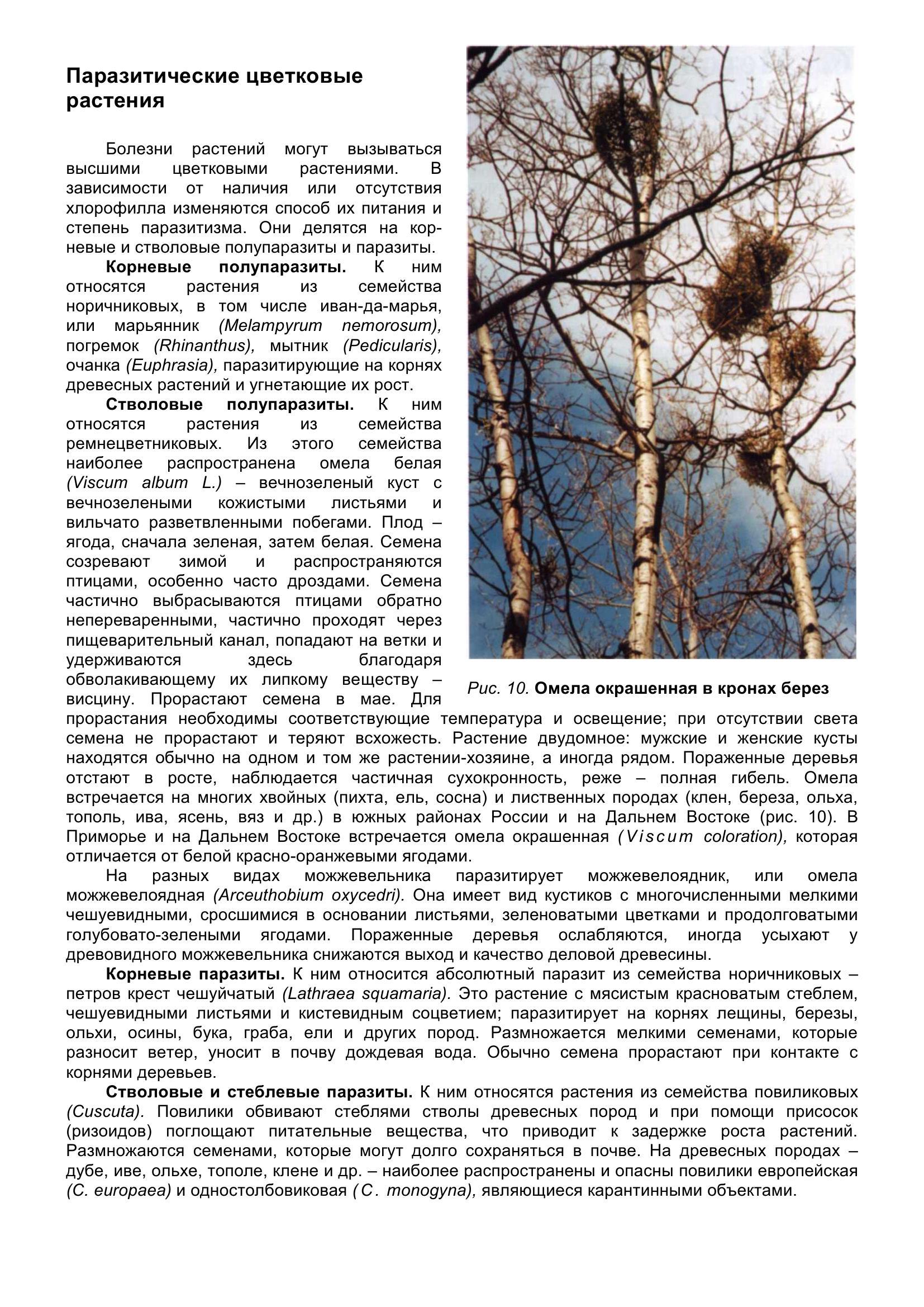 Болезни_древесных_растений_022.jpg