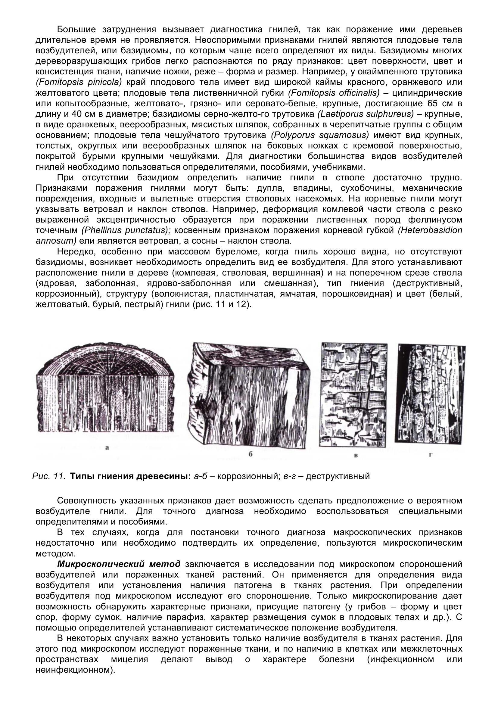 Болезни_древесных_растений_025.jpg