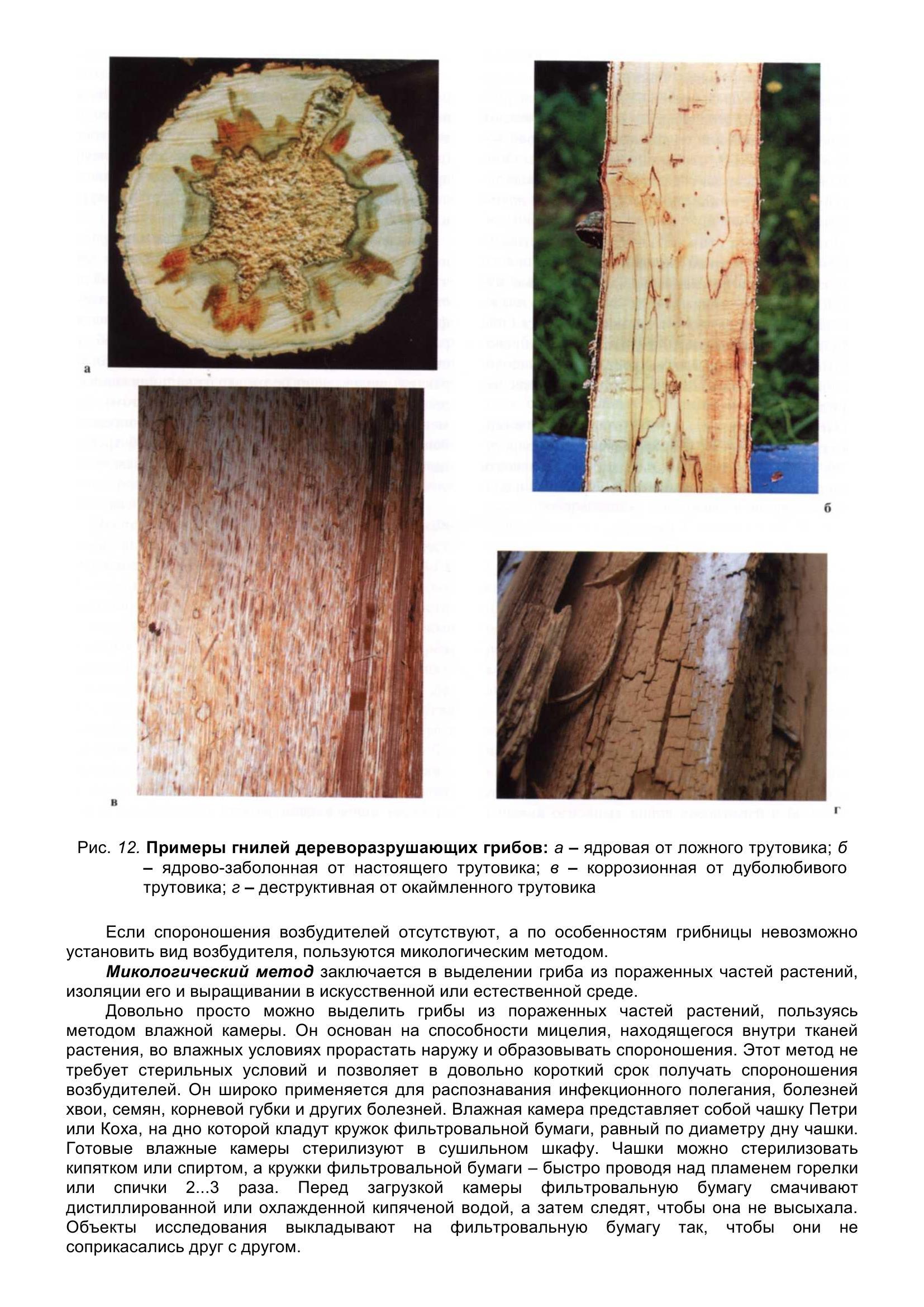 Болезни_древесных_растений_026.jpg