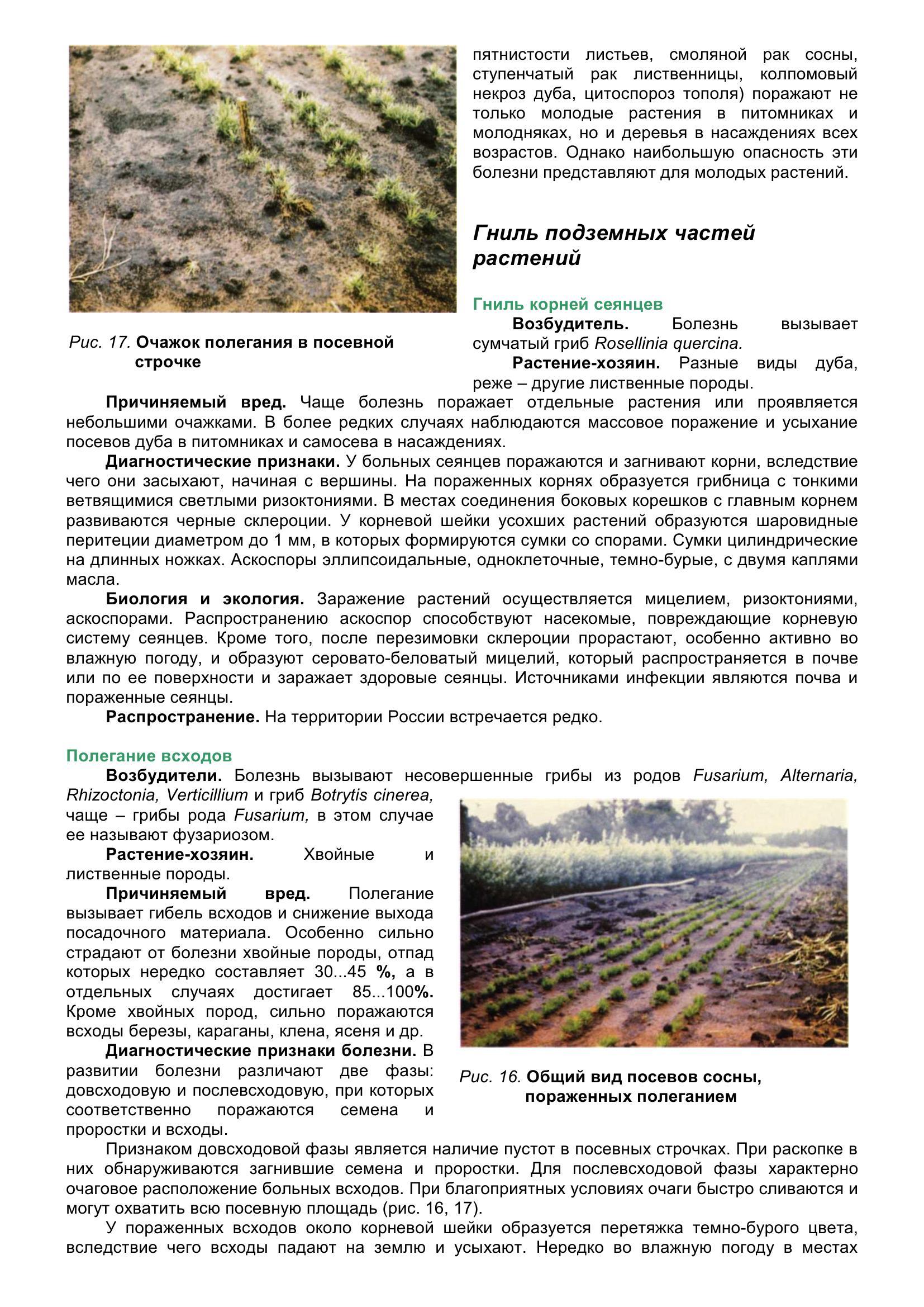 Болезни_древесных_растений_036.jpg