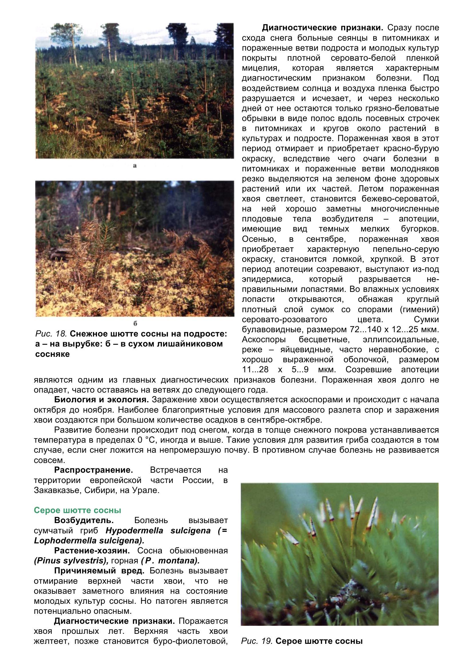 Болезни_древесных_растений_039.jpg