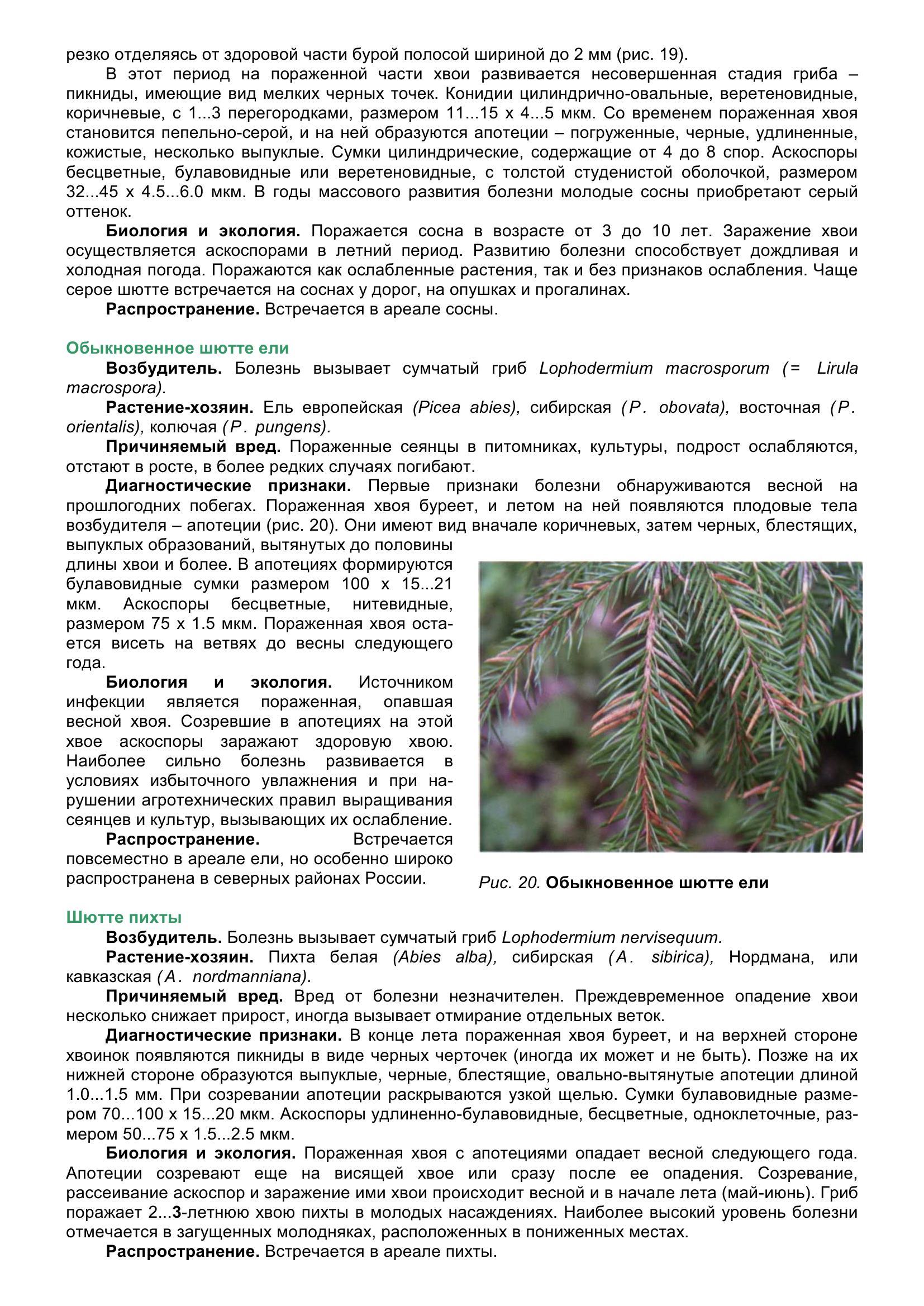 Болезни_древесных_растений_040.jpg