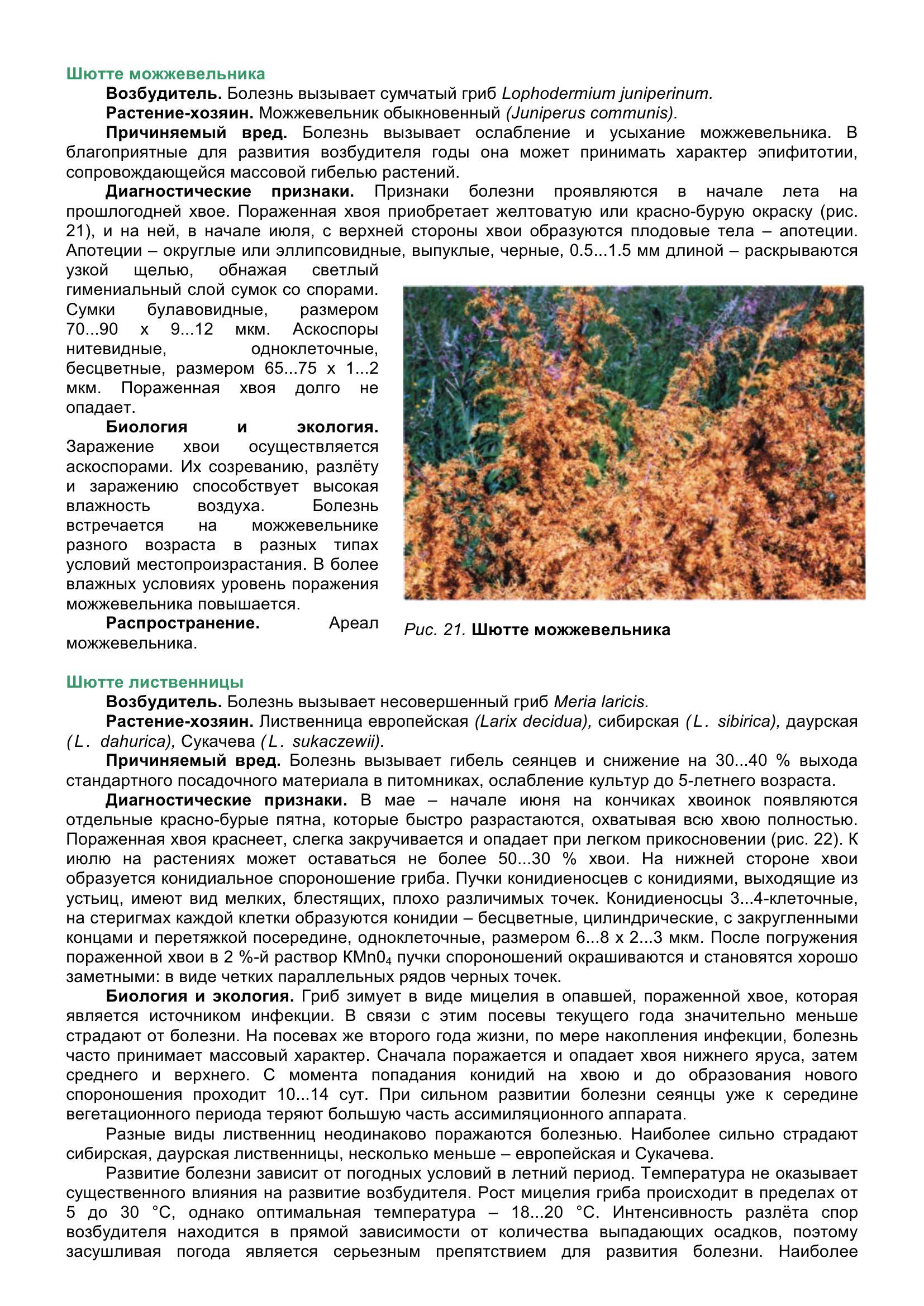 Болезни_древесных_растений_041.jpg