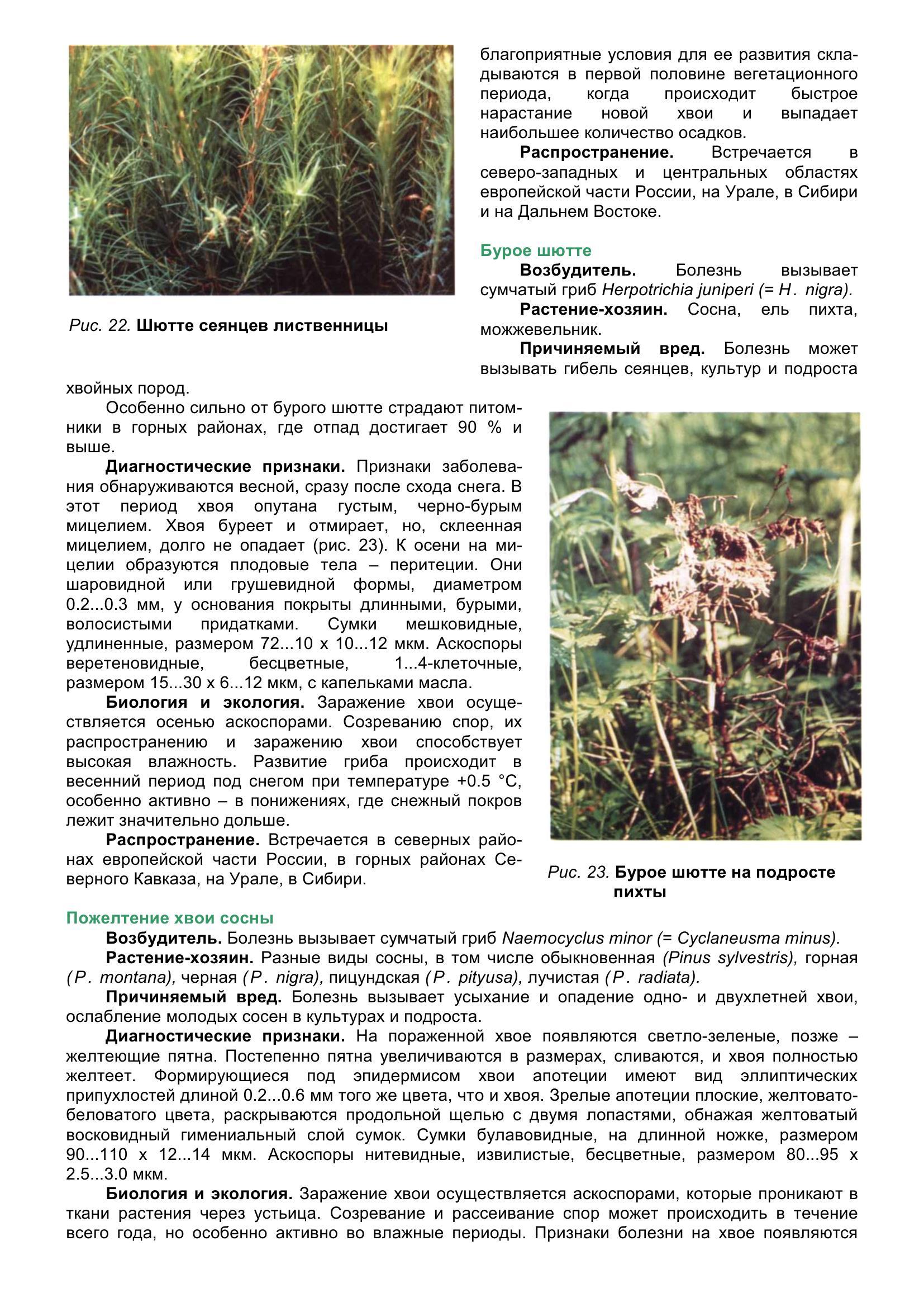 Болезни_древесных_растений_042.jpg