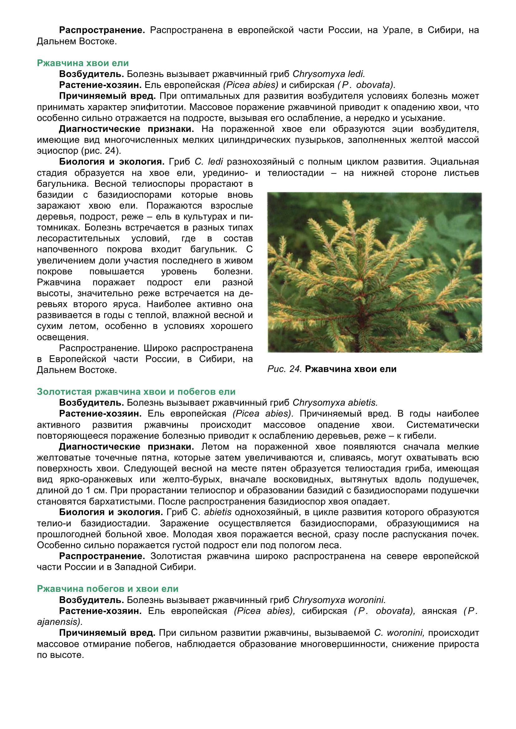Болезни_древесных_растений_044.jpg