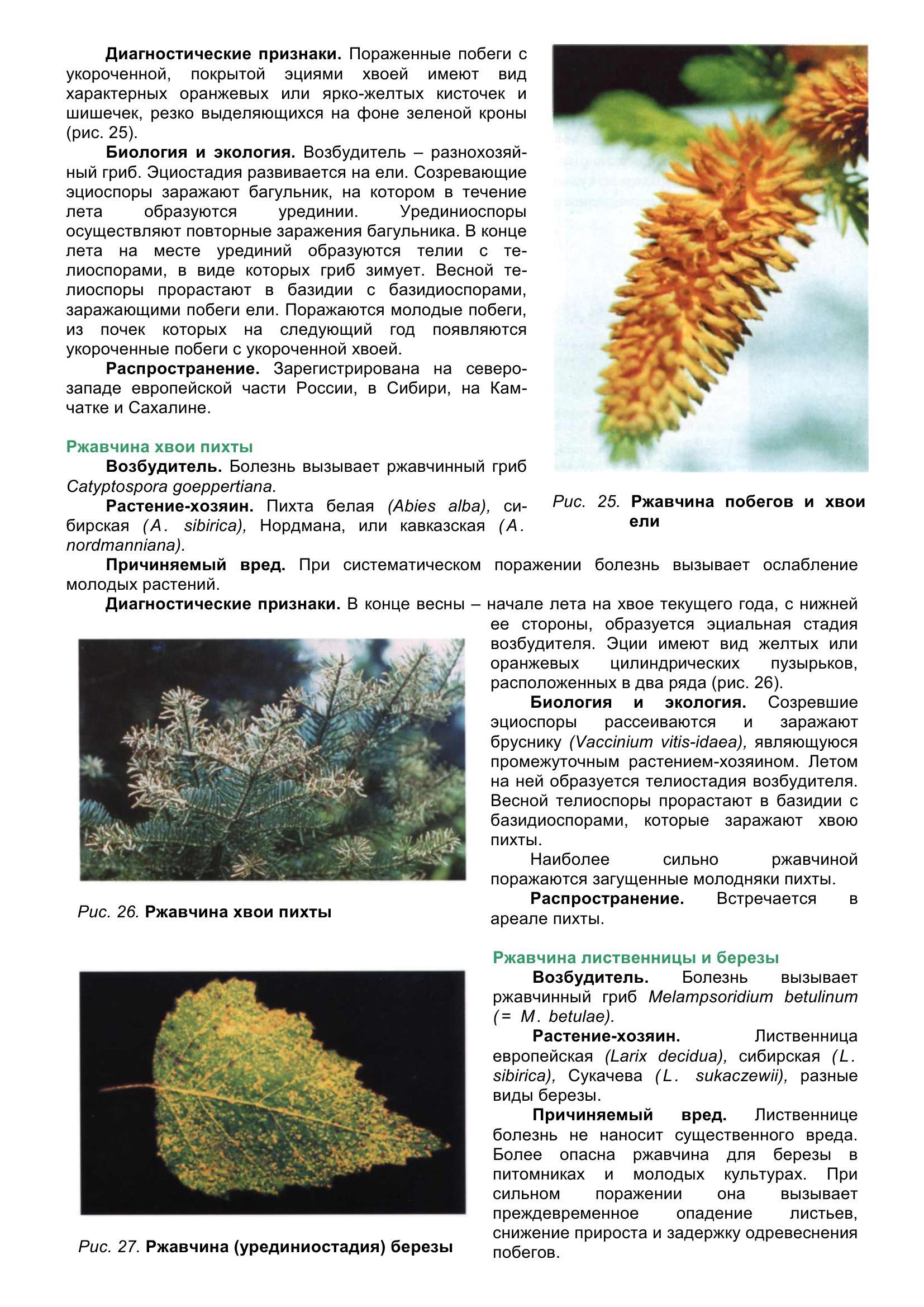 Болезни_древесных_растений_045.jpg