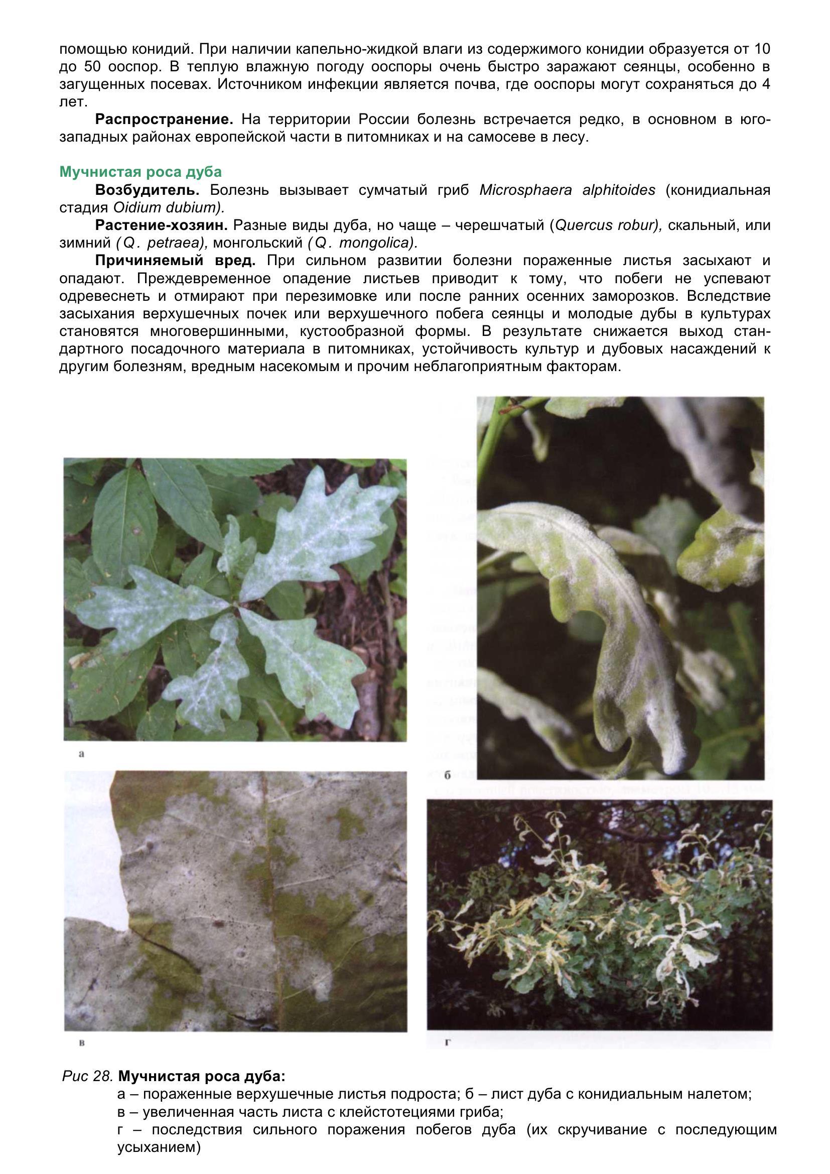 Болезни_древесных_растений_048.jpg