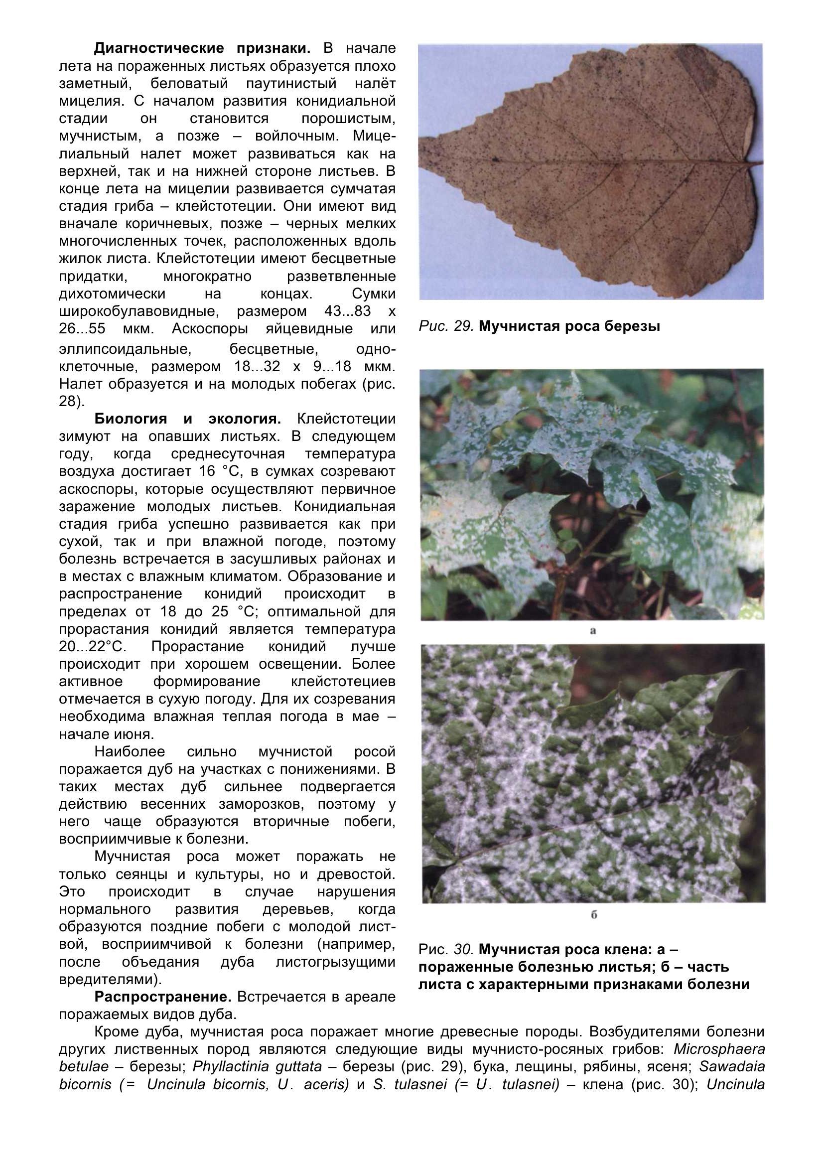 Болезни_древесных_растений_049.jpg