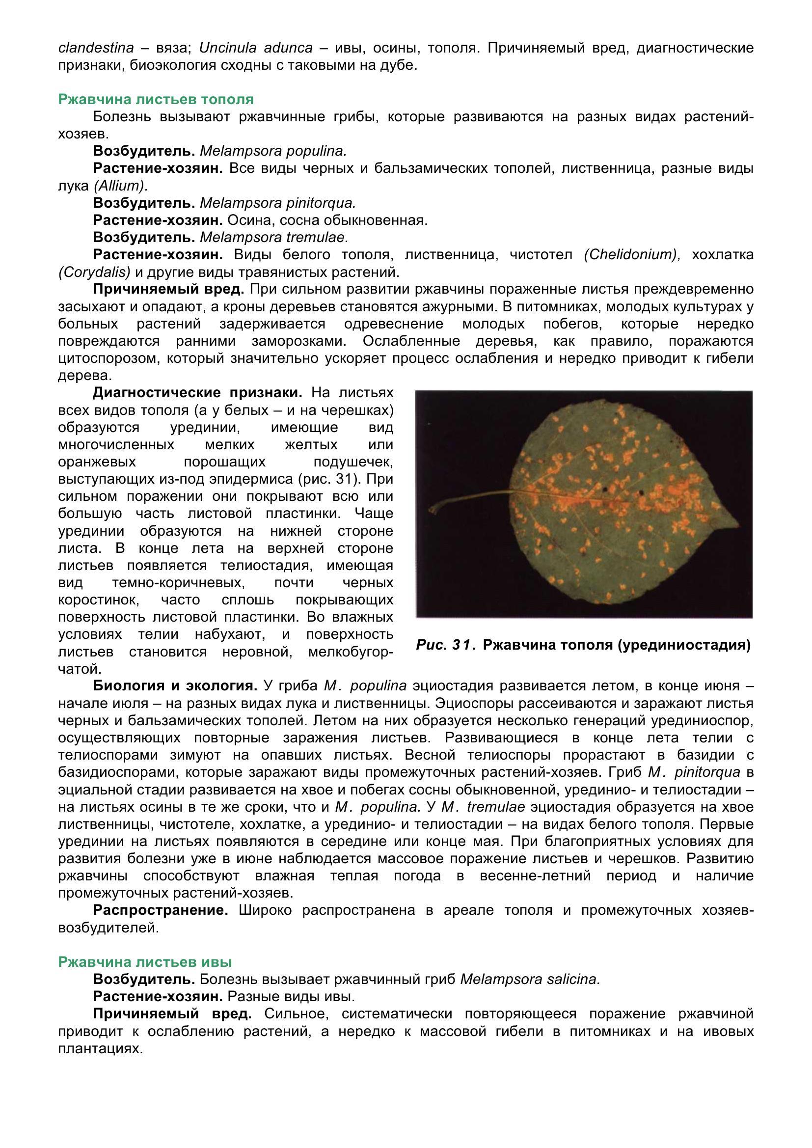 Болезни_древесных_растений_050.jpg