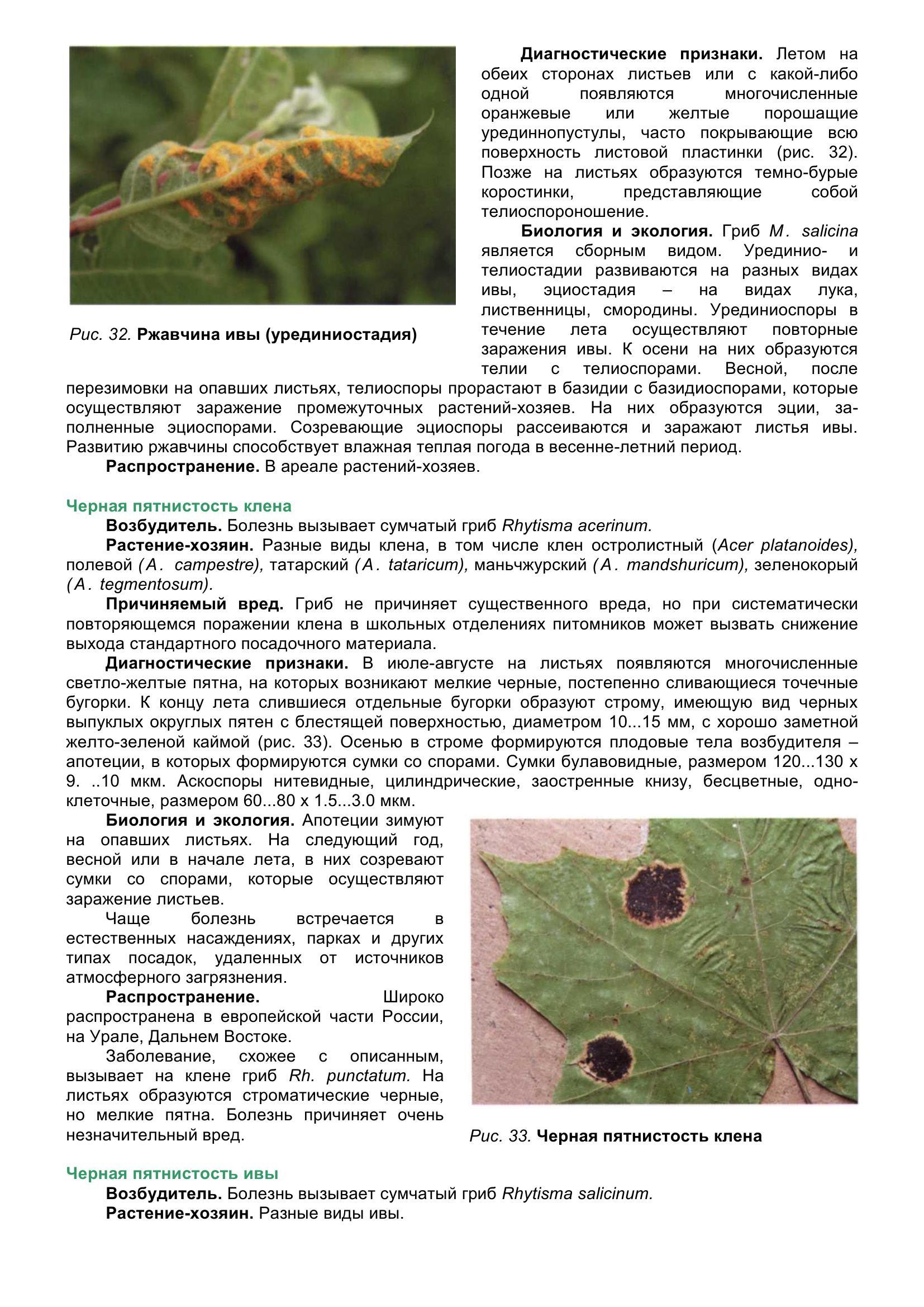 Болезни_древесных_растений_051.jpg