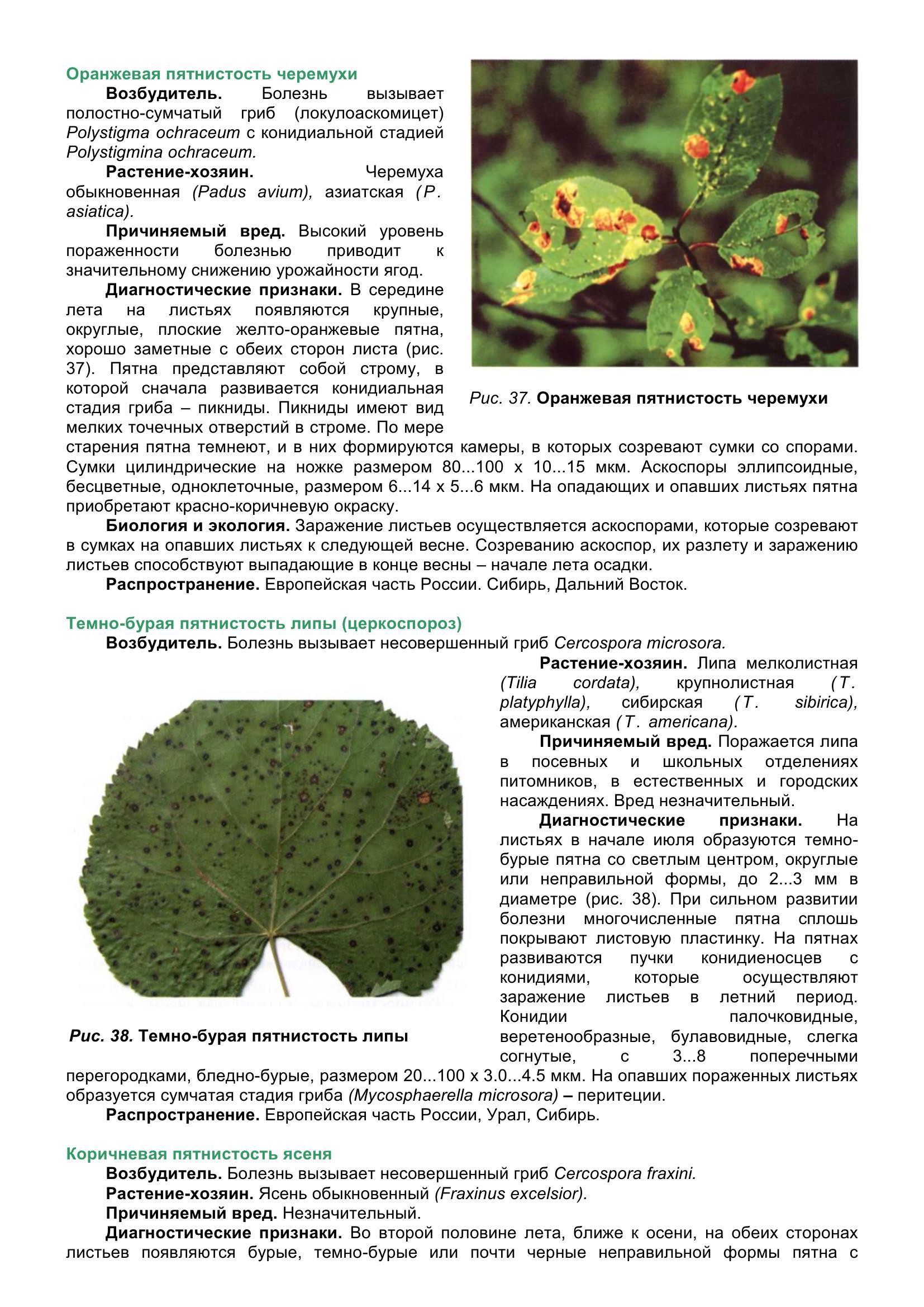 Болезни_древесных_растений_053.jpg