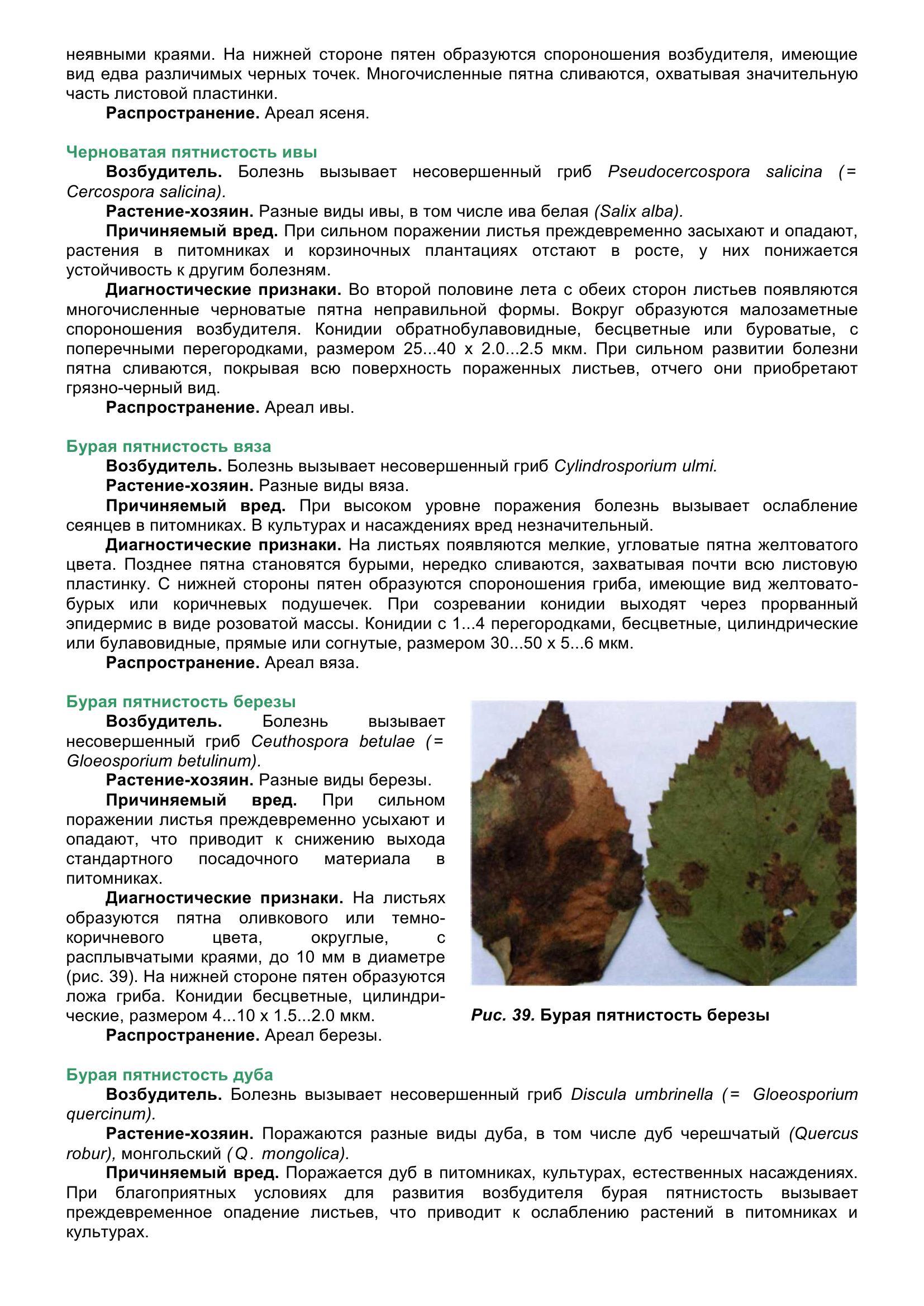 Болезни_древесных_растений_054.jpg