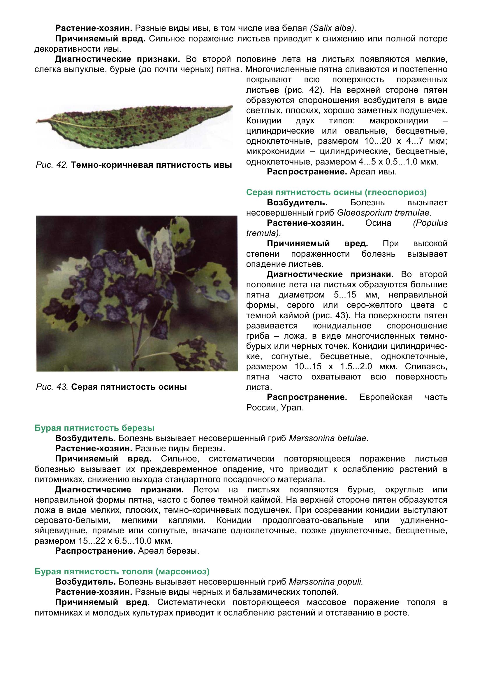 Болезни_древесных_растений_056.jpg