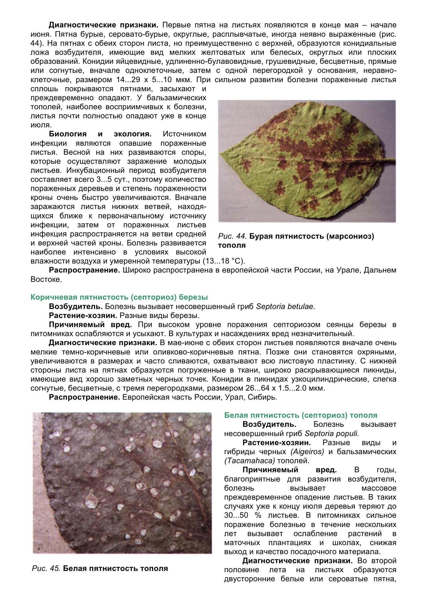 Болезни_древесных_растений_057.jpg