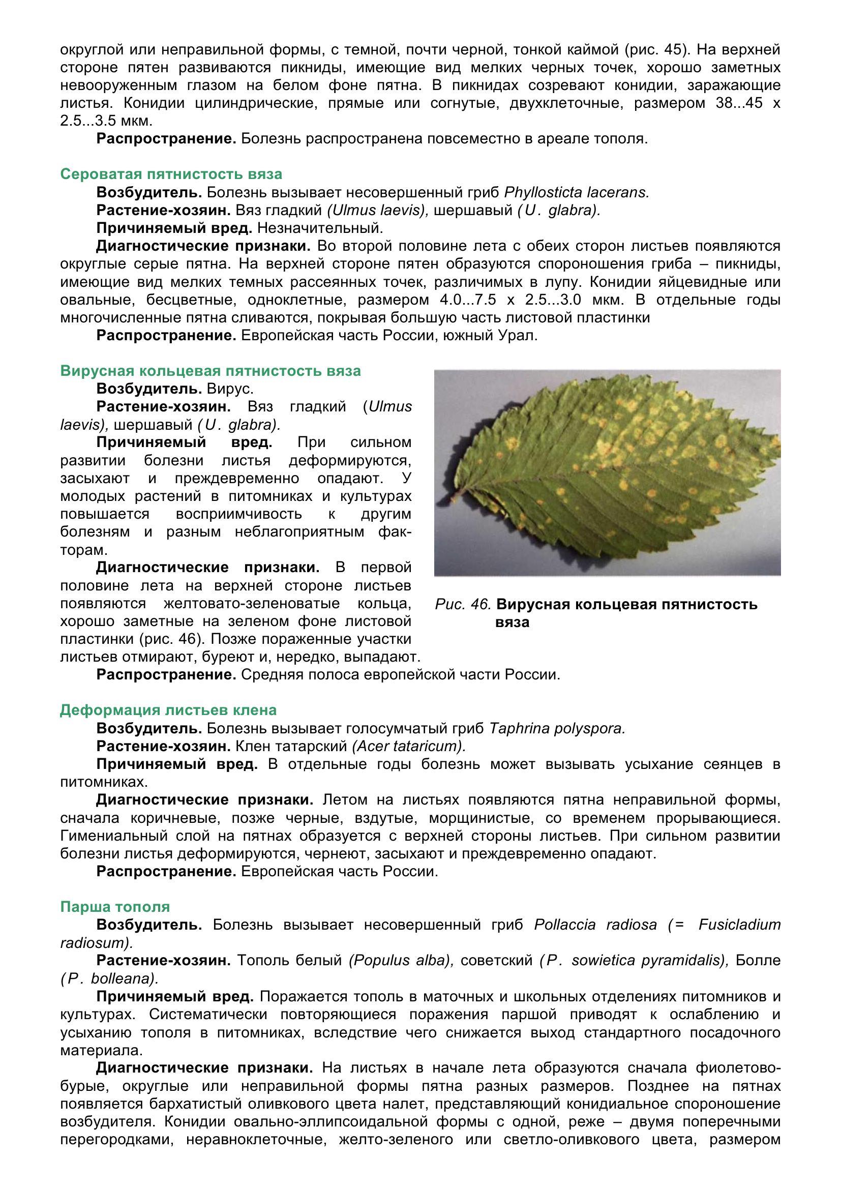 Болезни_древесных_растений_058.jpg