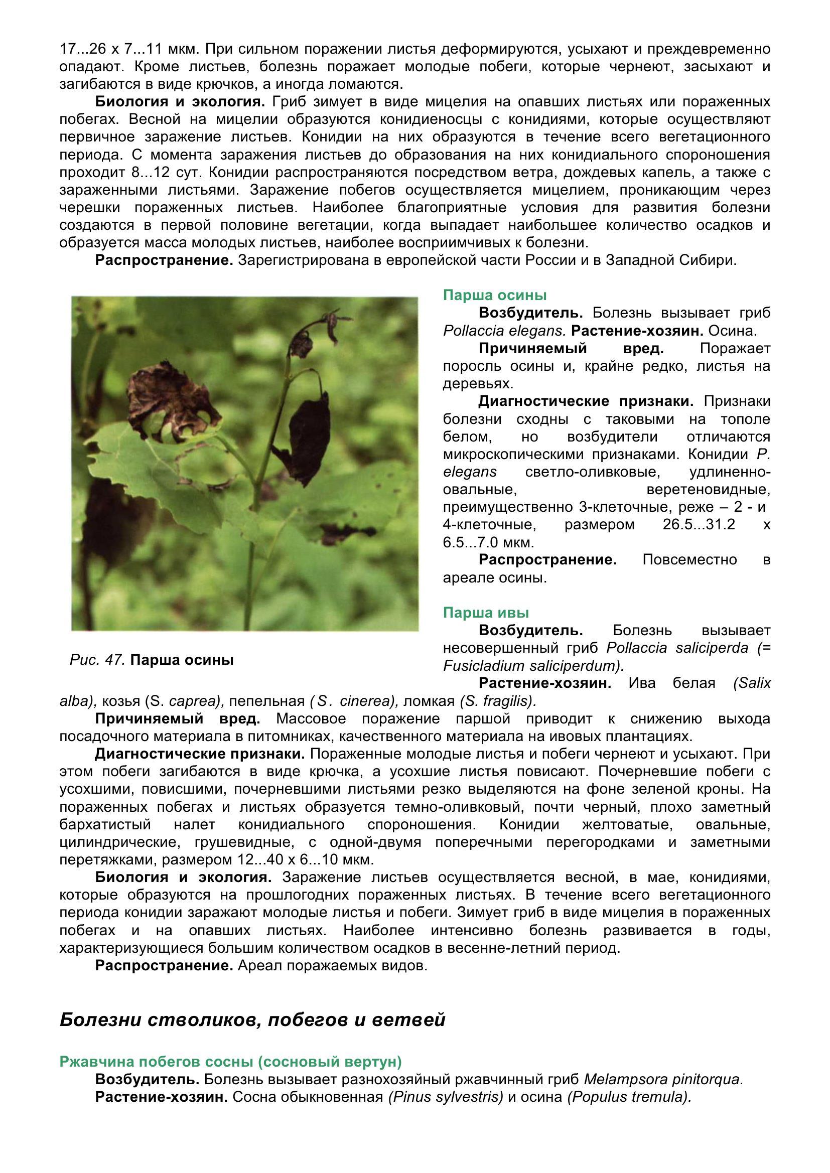 Болезни_древесных_растений_059.jpg