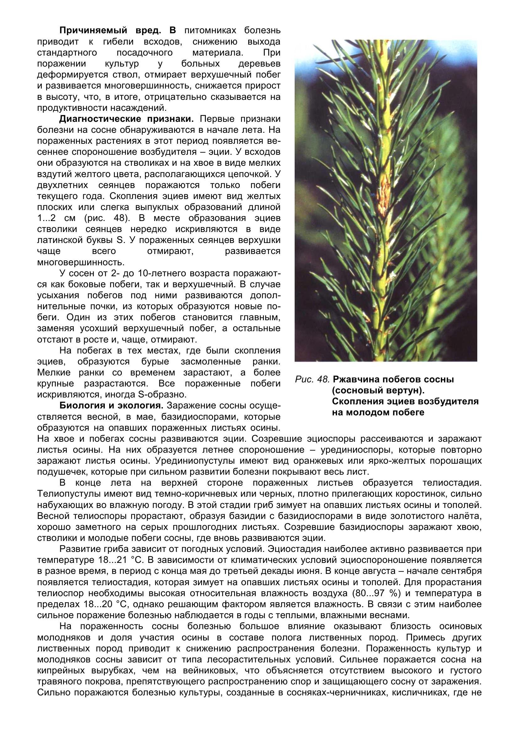 Болезни_древесных_растений_060.jpg