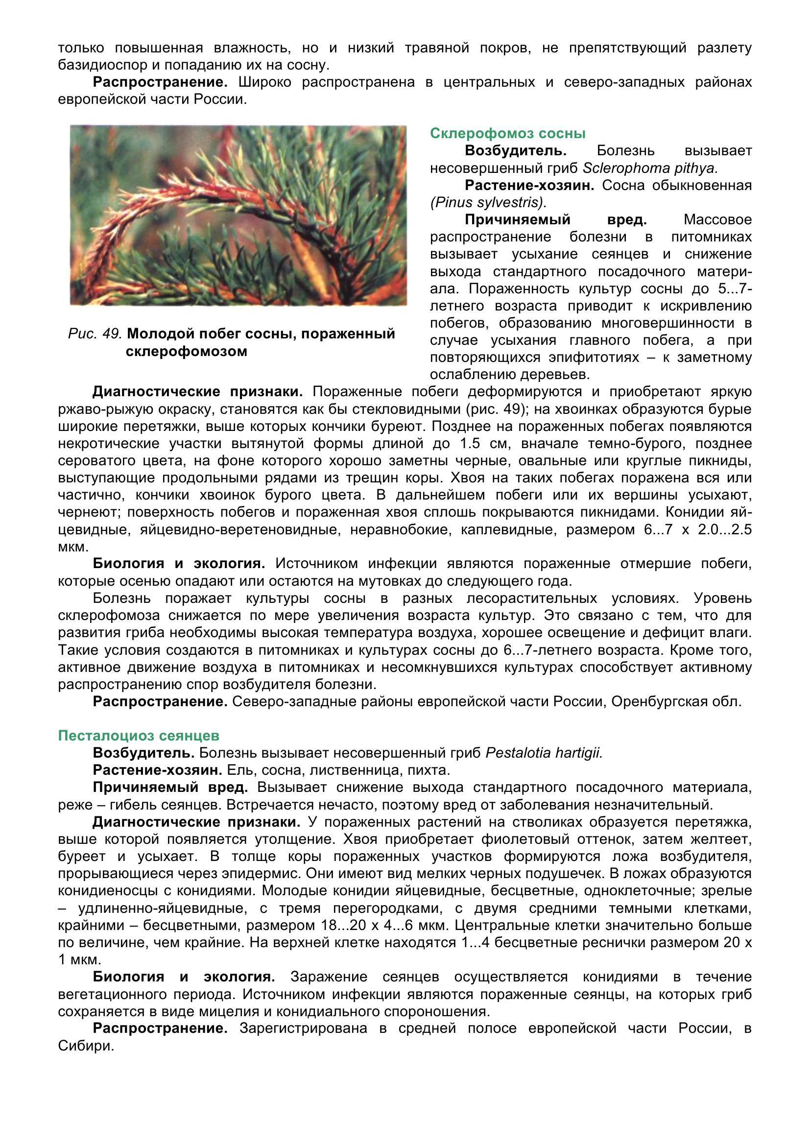 Болезни_древесных_растений_061.jpg