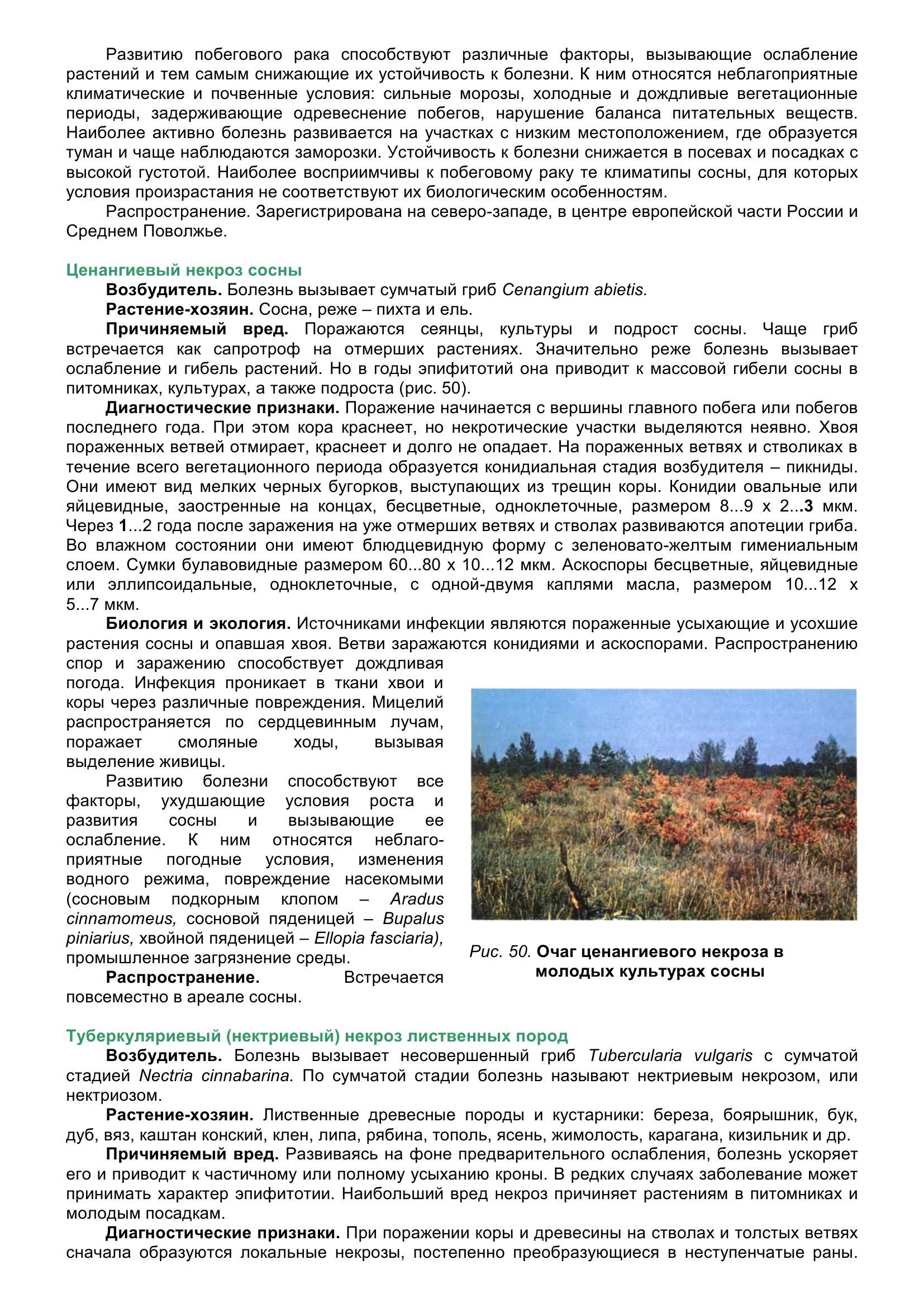 Болезни_древесных_растений_063.jpg