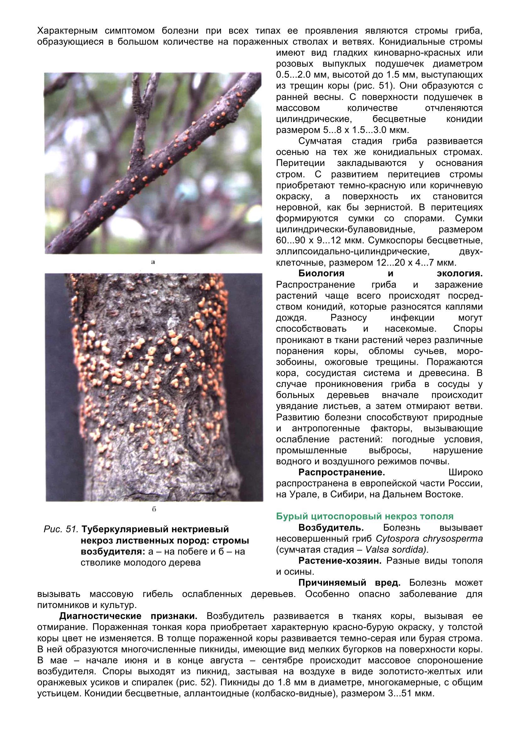 Болезни_древесных_растений_064.jpg