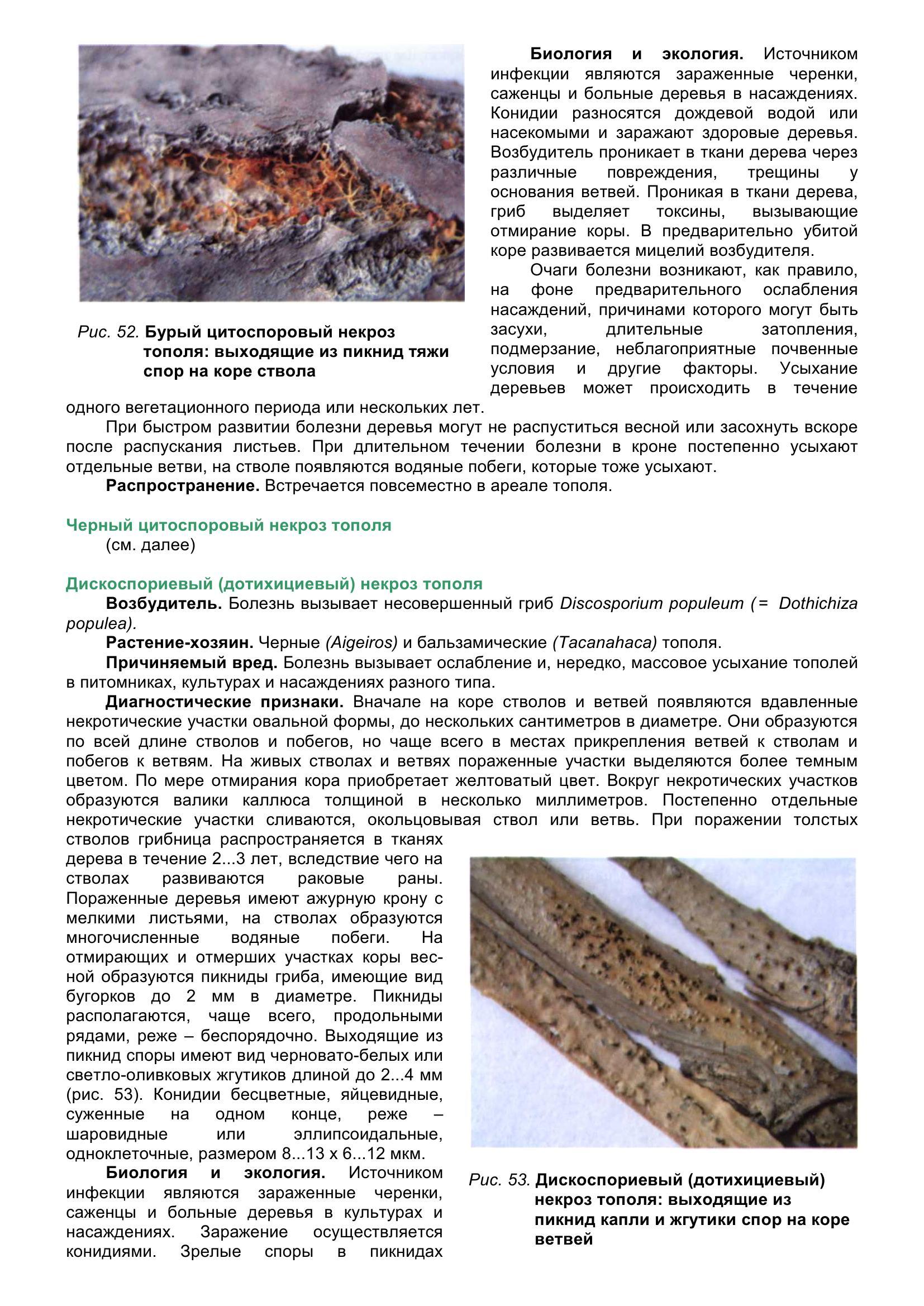 Болезни_древесных_растений_065.jpg