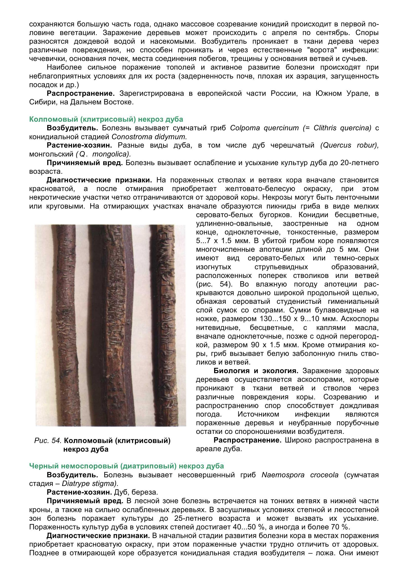 Болезни_древесных_растений_066.jpg