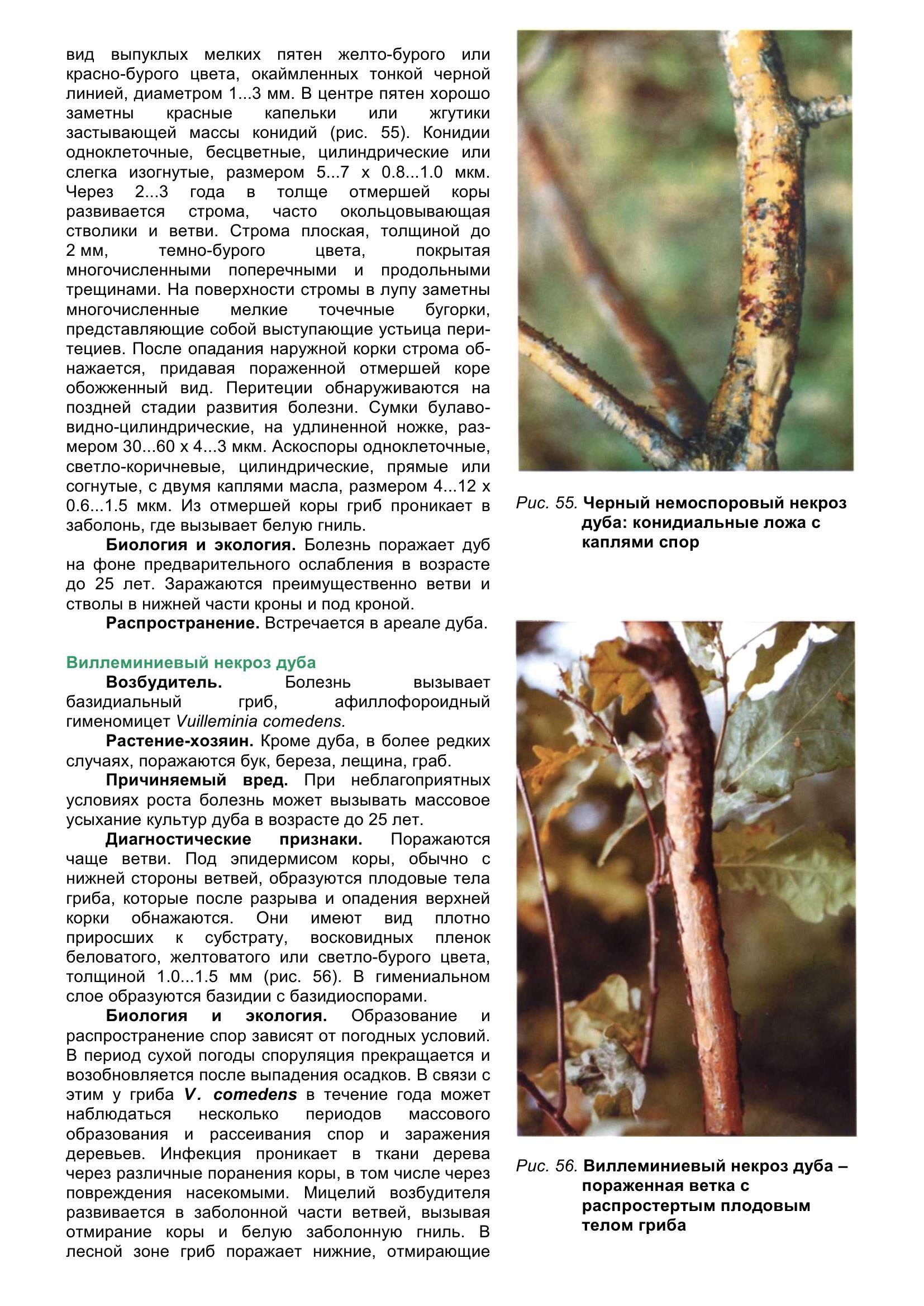 Болезни_древесных_растений_067.jpg