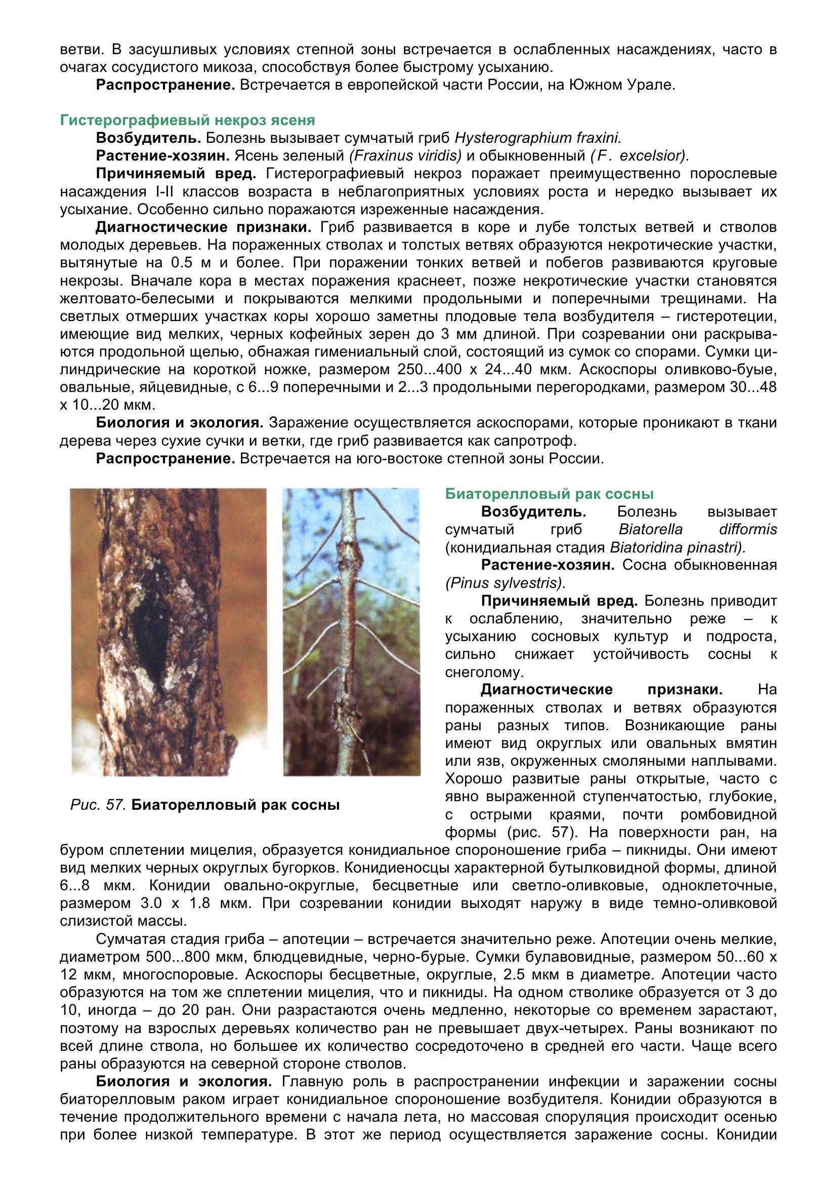 Болезни_древесных_растений_068.jpg