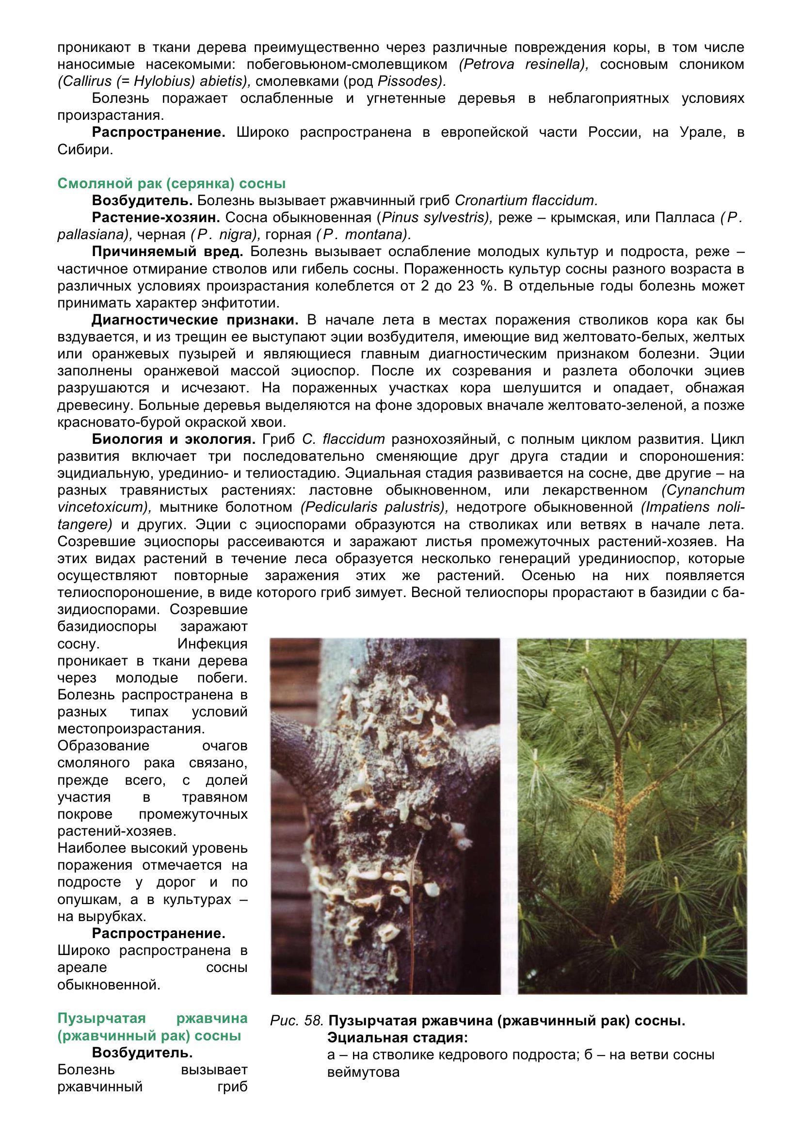 Болезни_древесных_растений_069.jpg