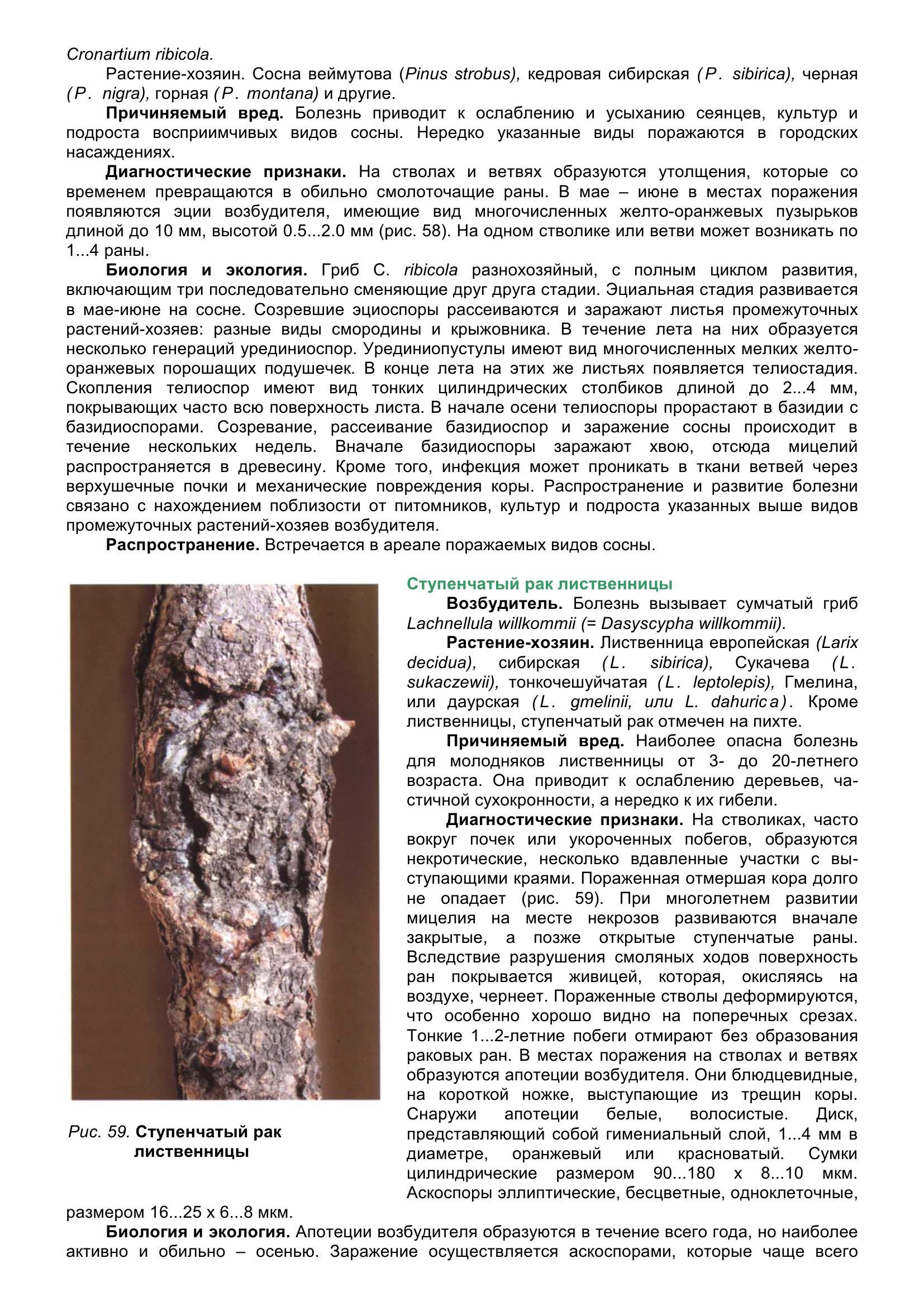 Болезни_древесных_растений_070.jpg