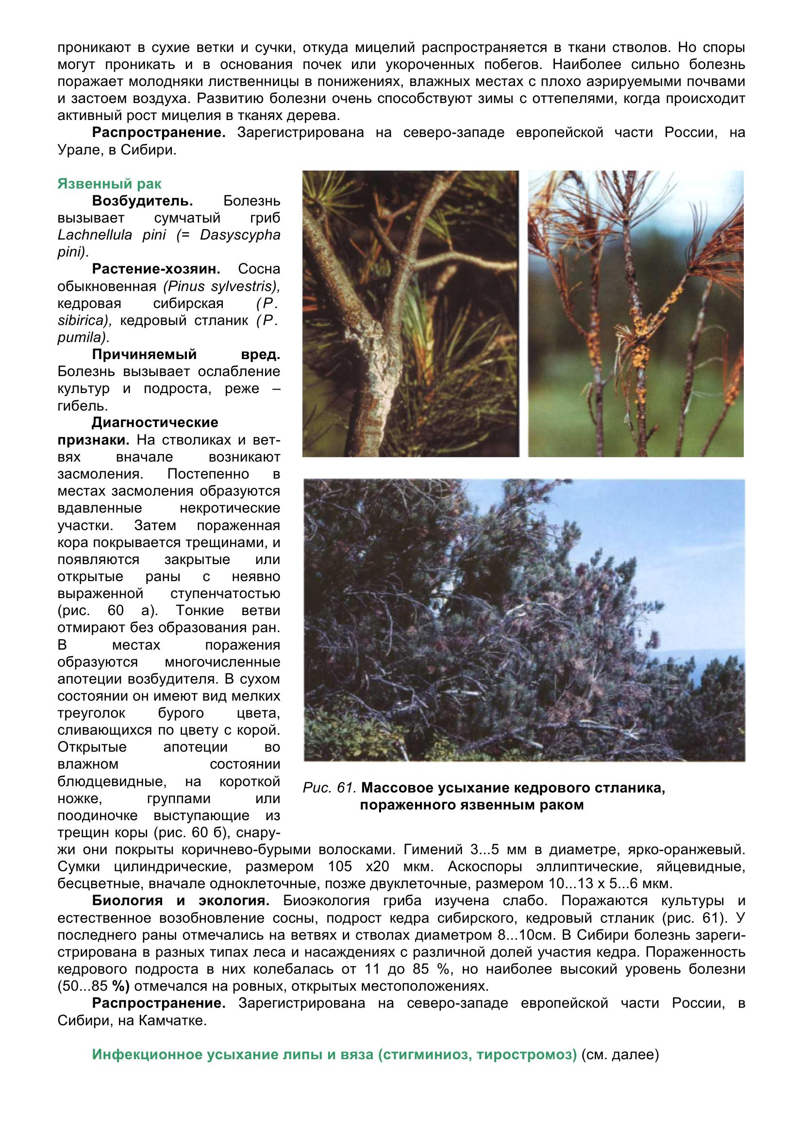 Болезни_древесных_растений_071.jpg