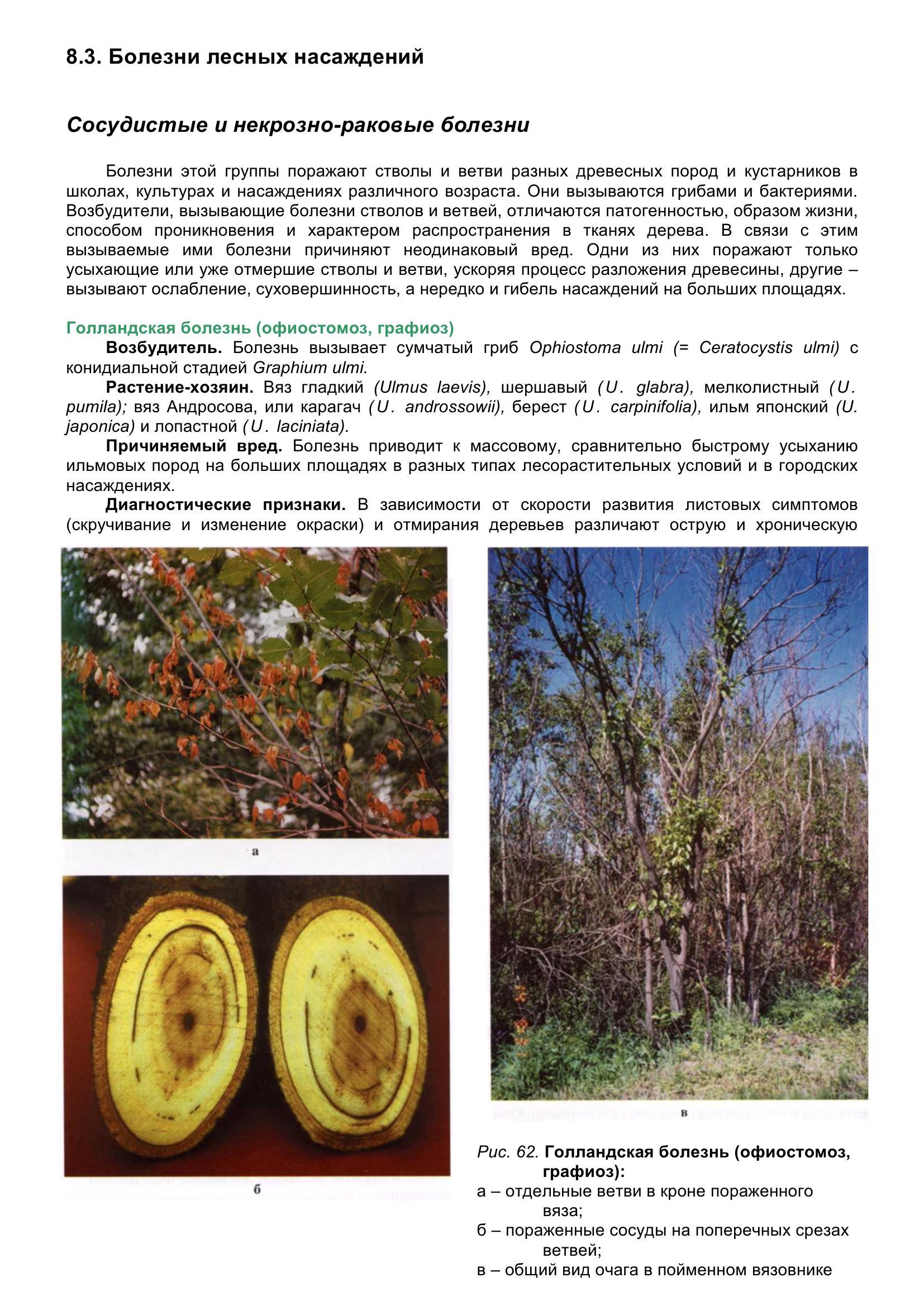 Болезни_древесных_растений_072.jpg