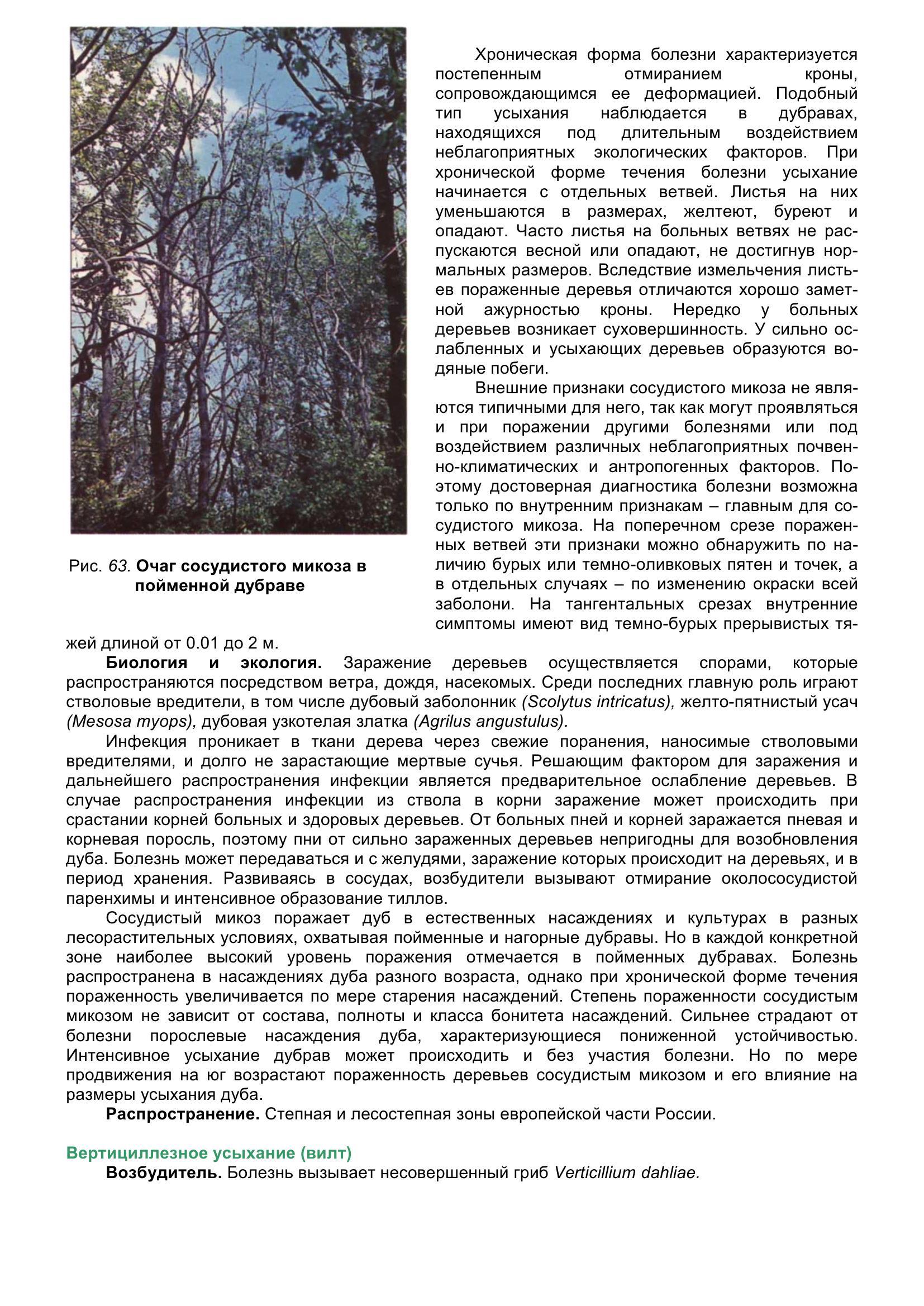 Болезни_древесных_растений_074.jpg