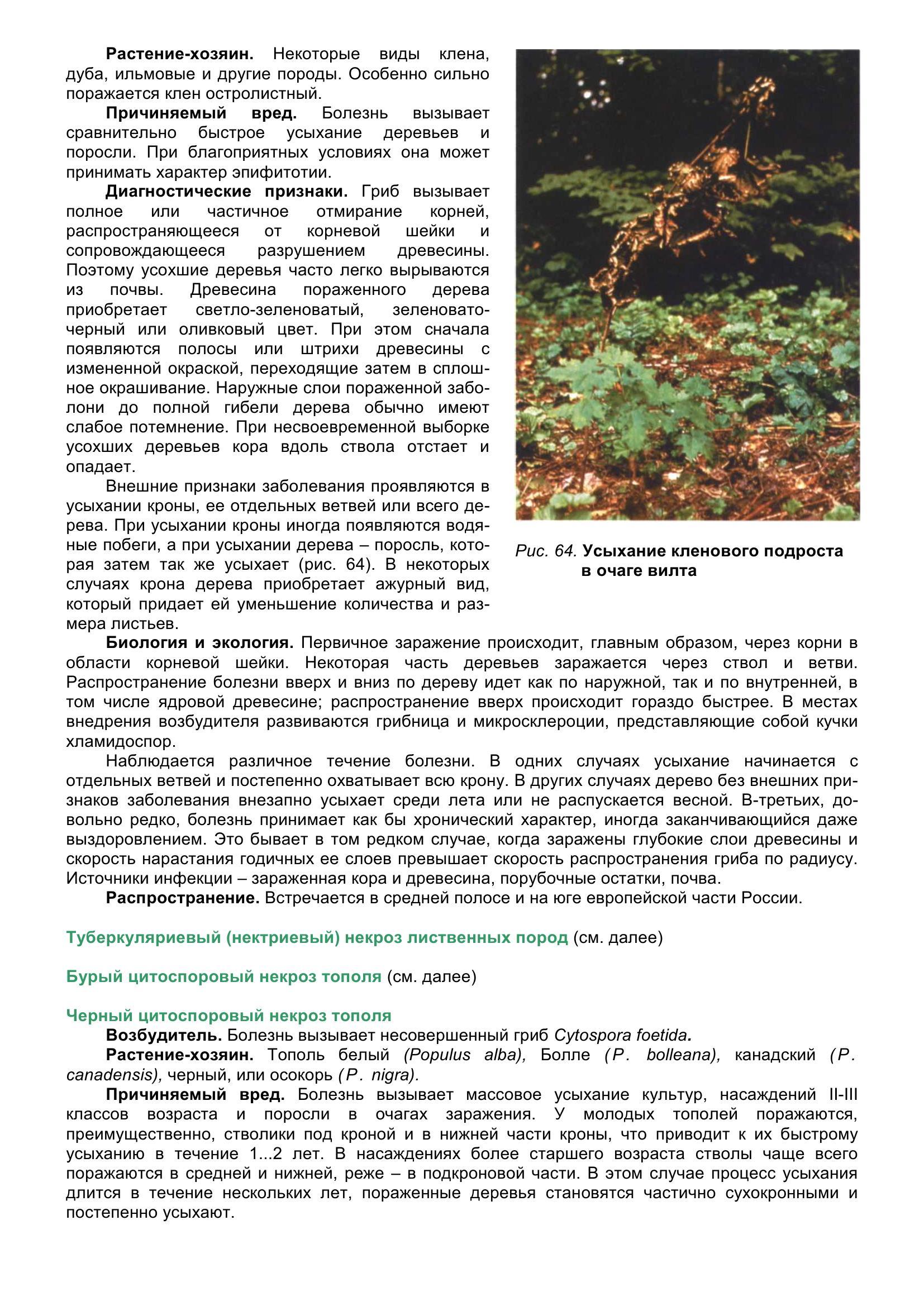 Болезни_древесных_растений_075.jpg
