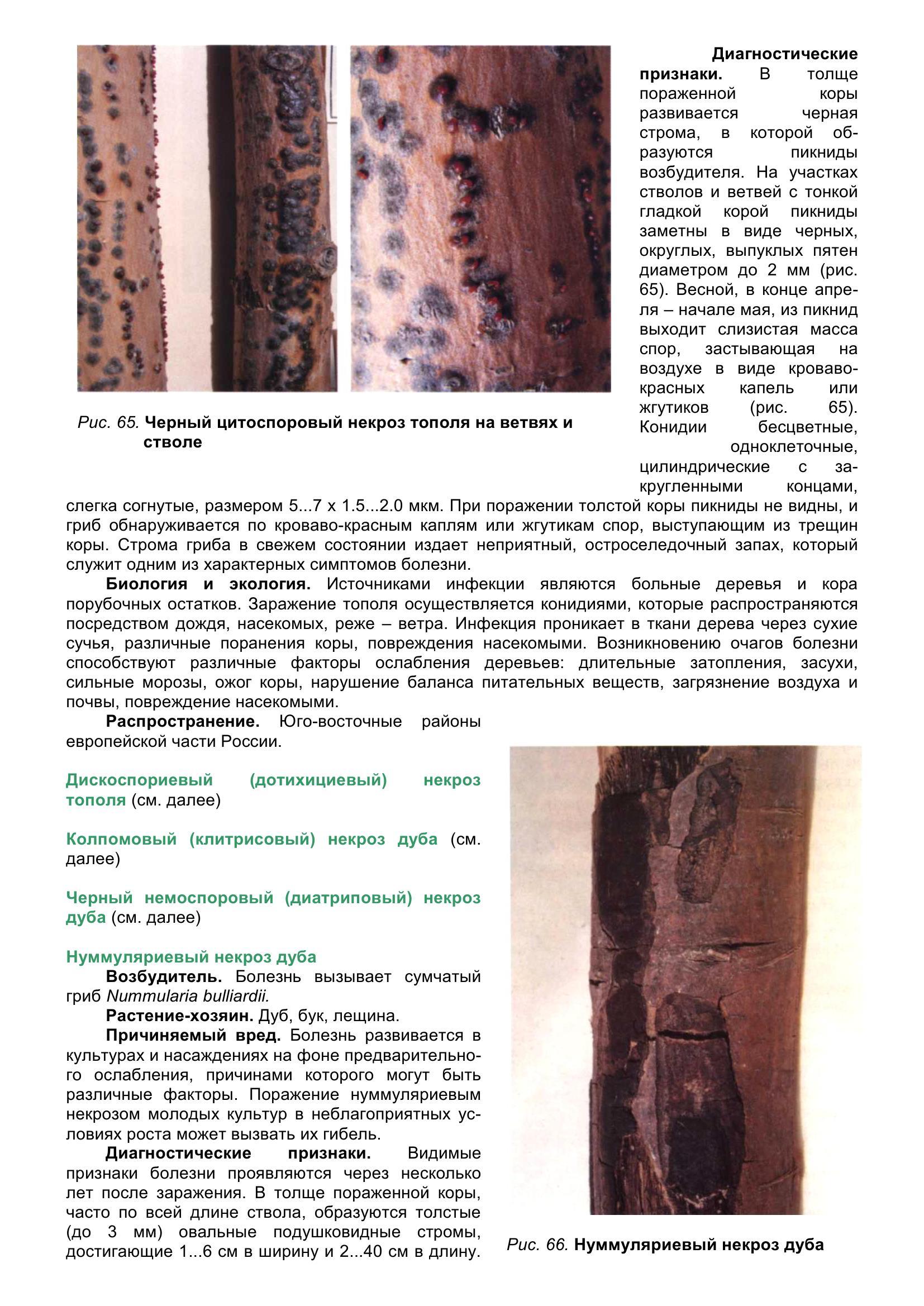 Болезни_древесных_растений_076.jpg