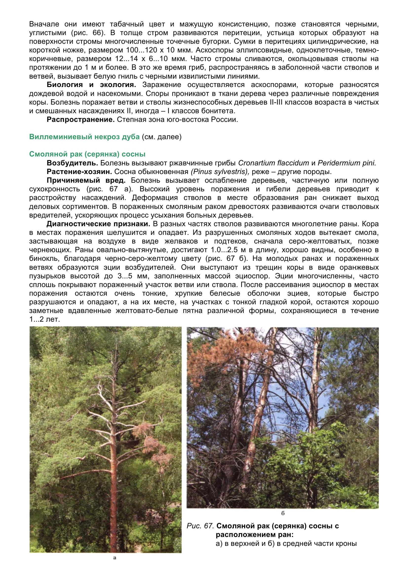 Болезни_древесных_растений_077.jpg
