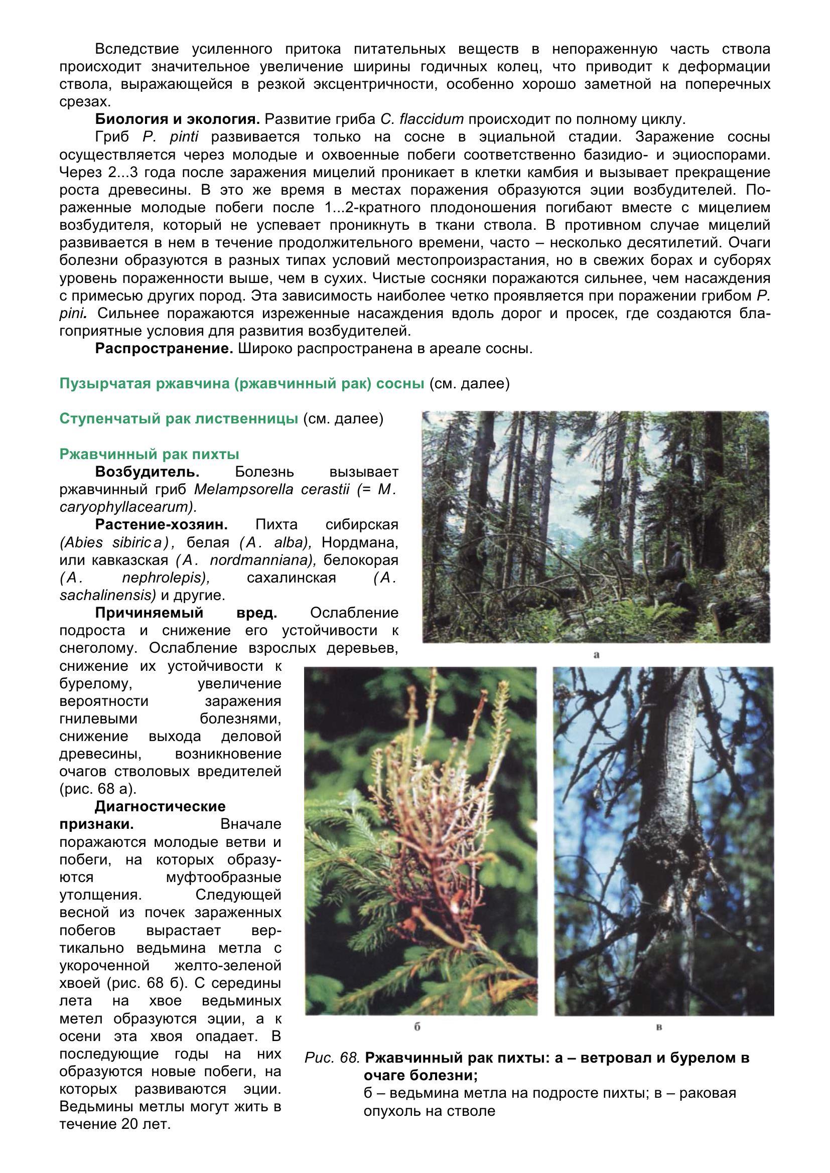 Болезни_древесных_растений_078.jpg
