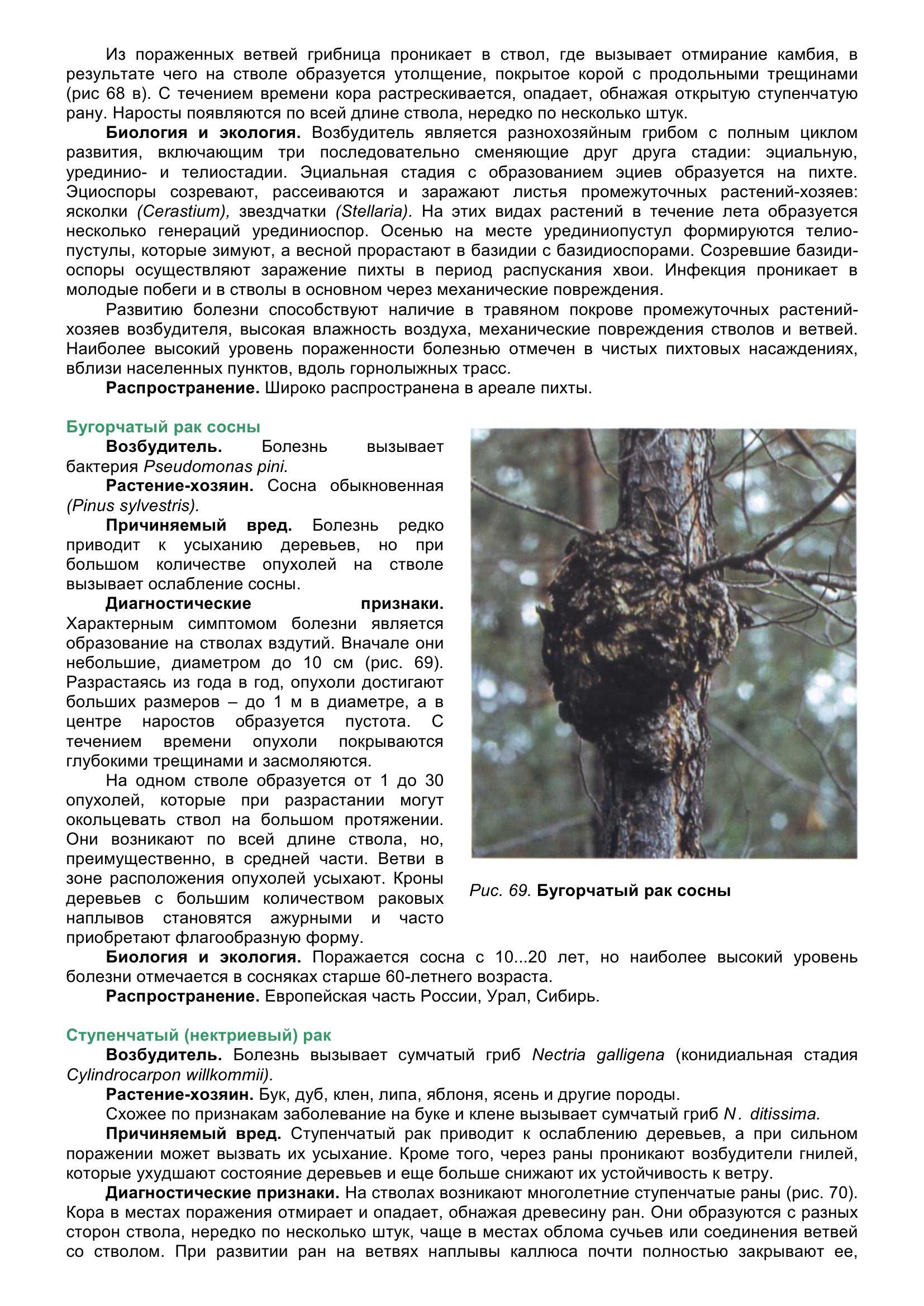 Болезни_древесных_растений_079.jpg