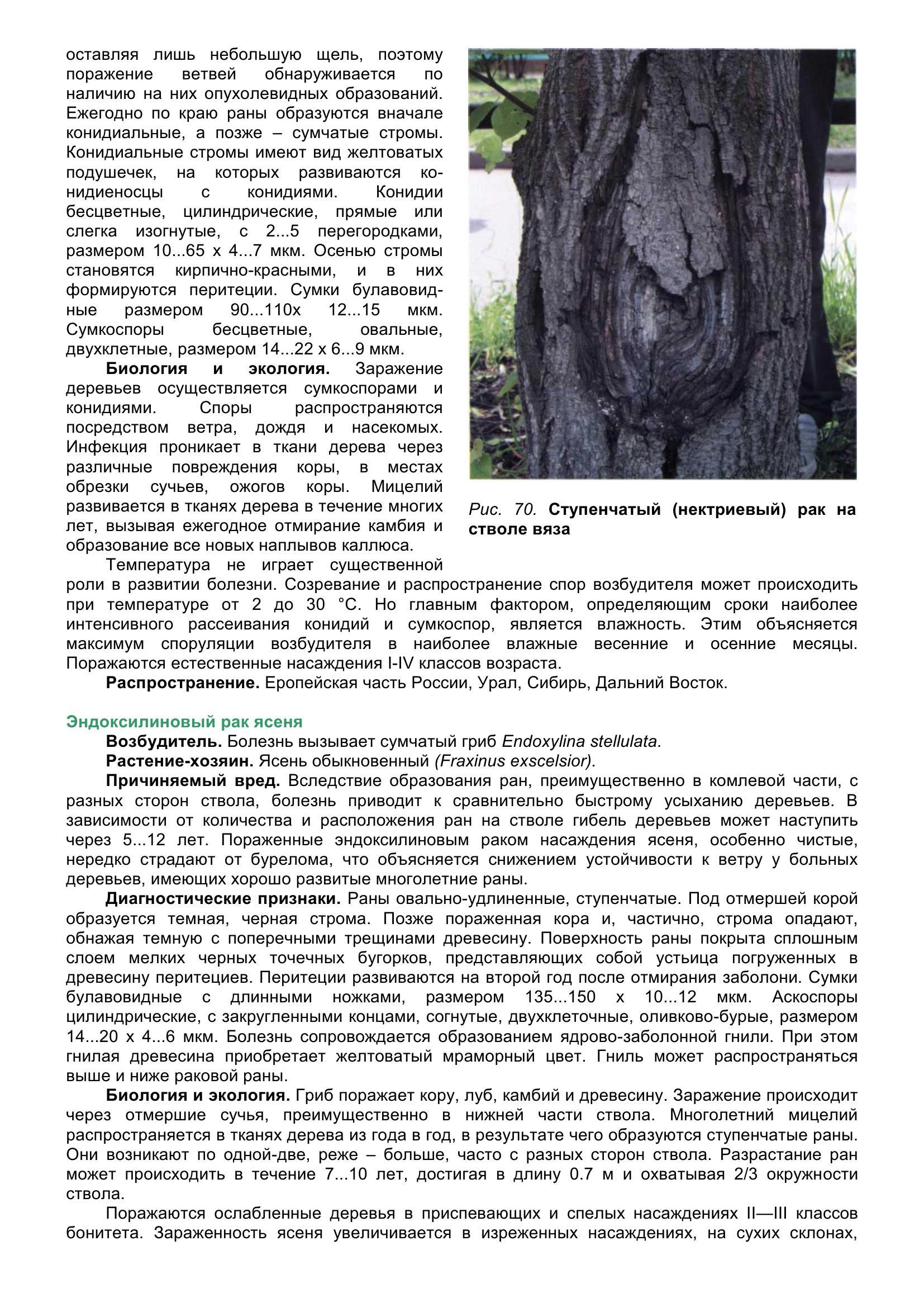 Болезни_древесных_растений_080.jpg