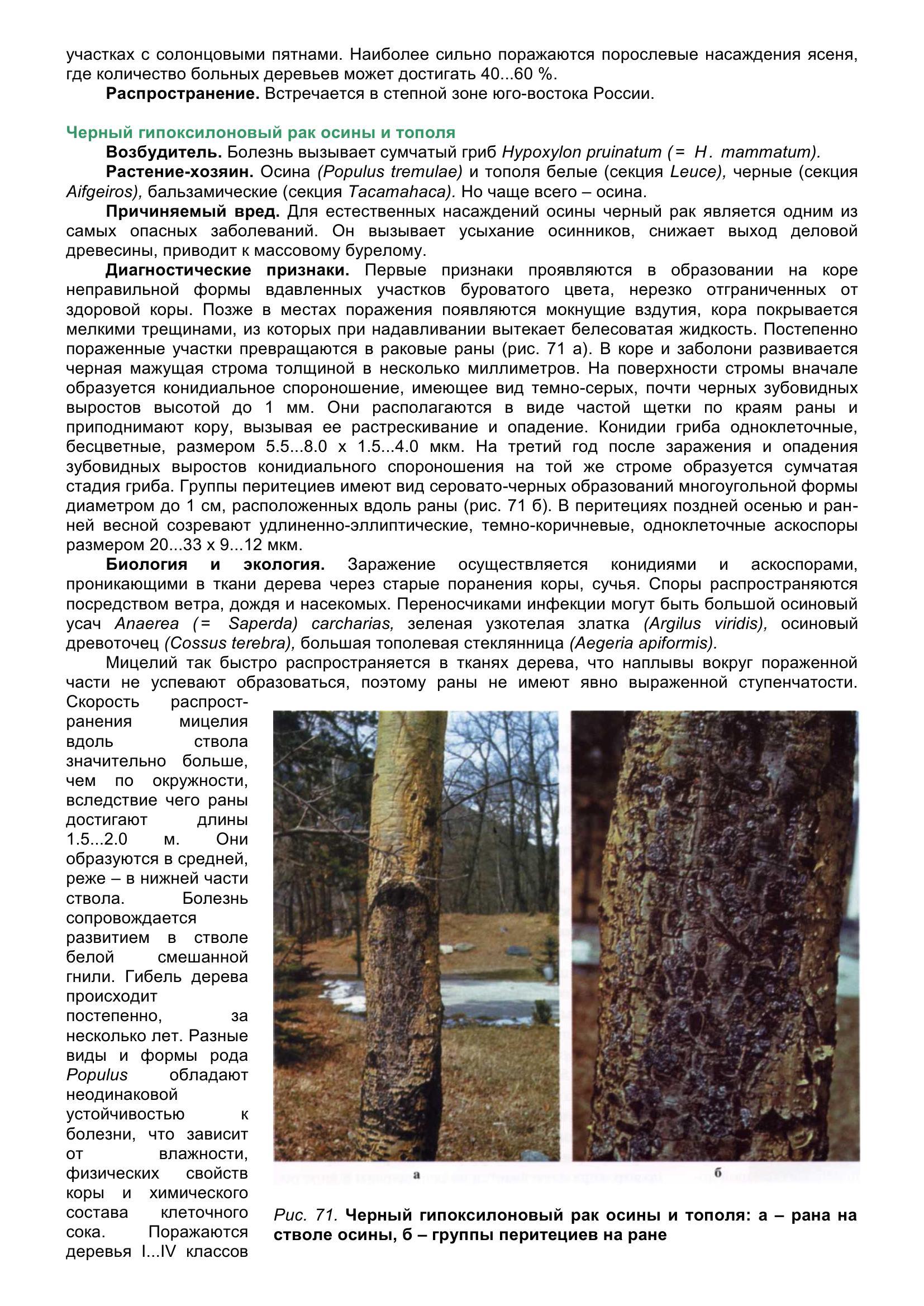 Болезни_древесных_растений_081.jpg