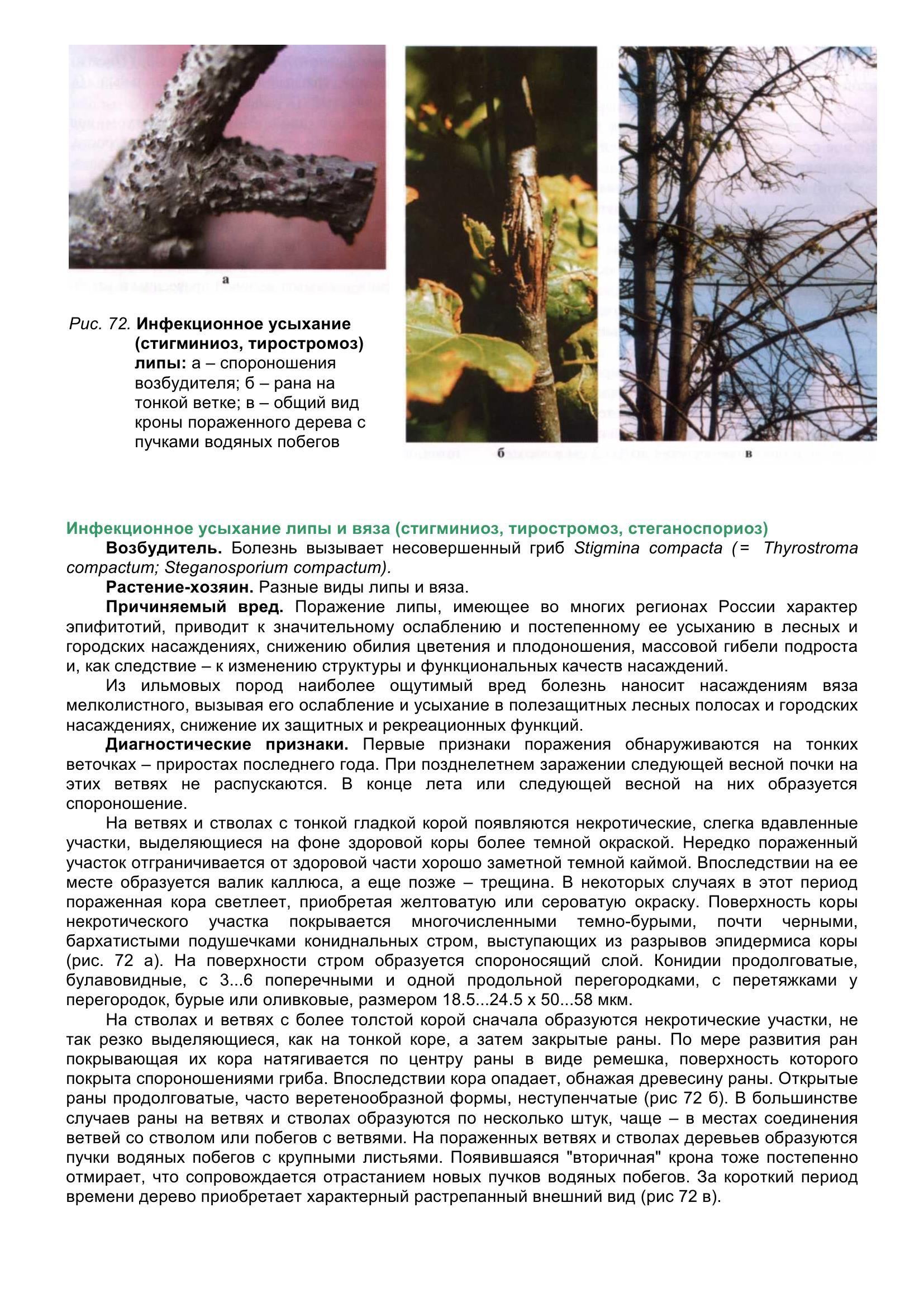 Болезни_древесных_растений_083.jpg