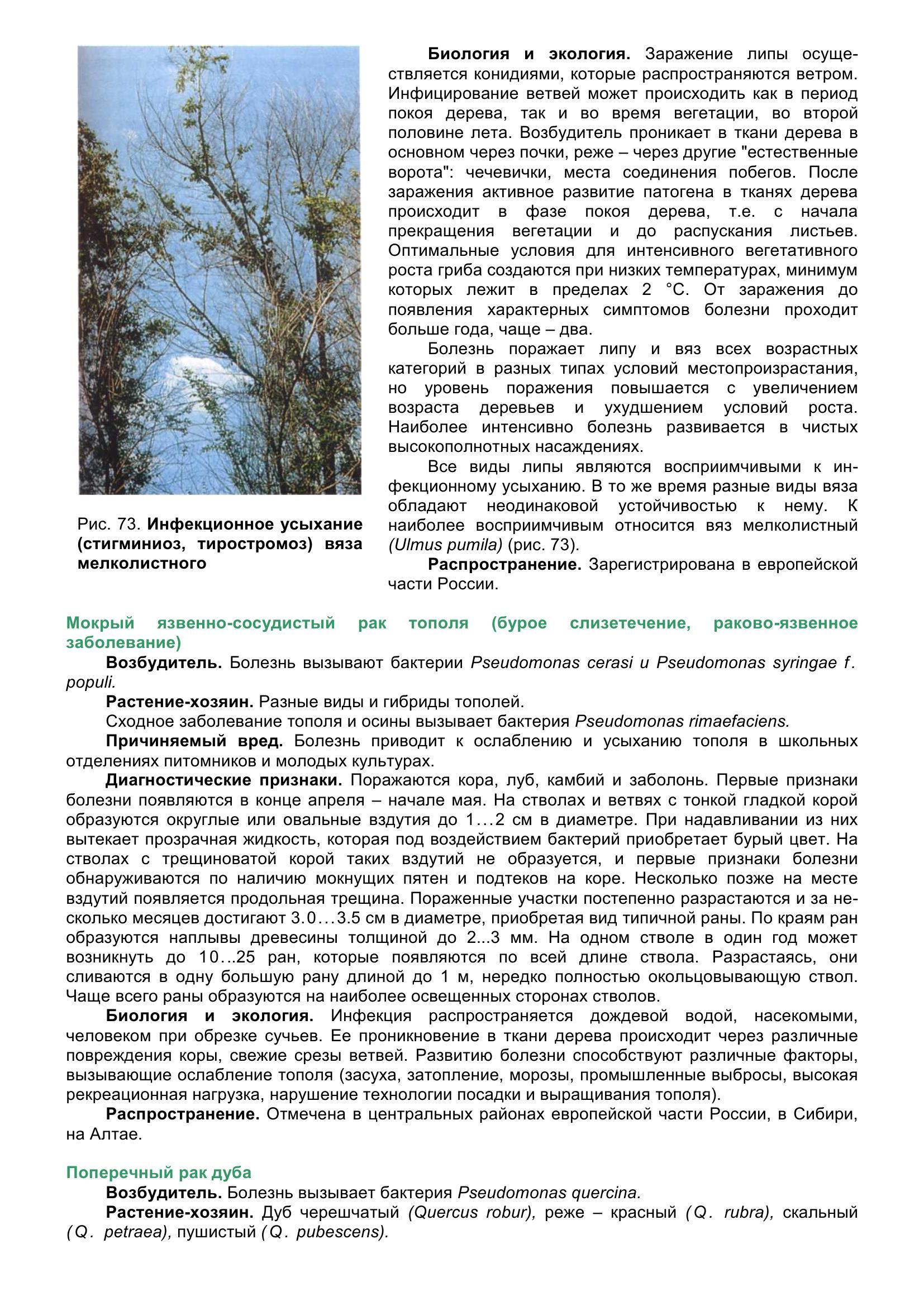 Болезни_древесных_растений_084.jpg