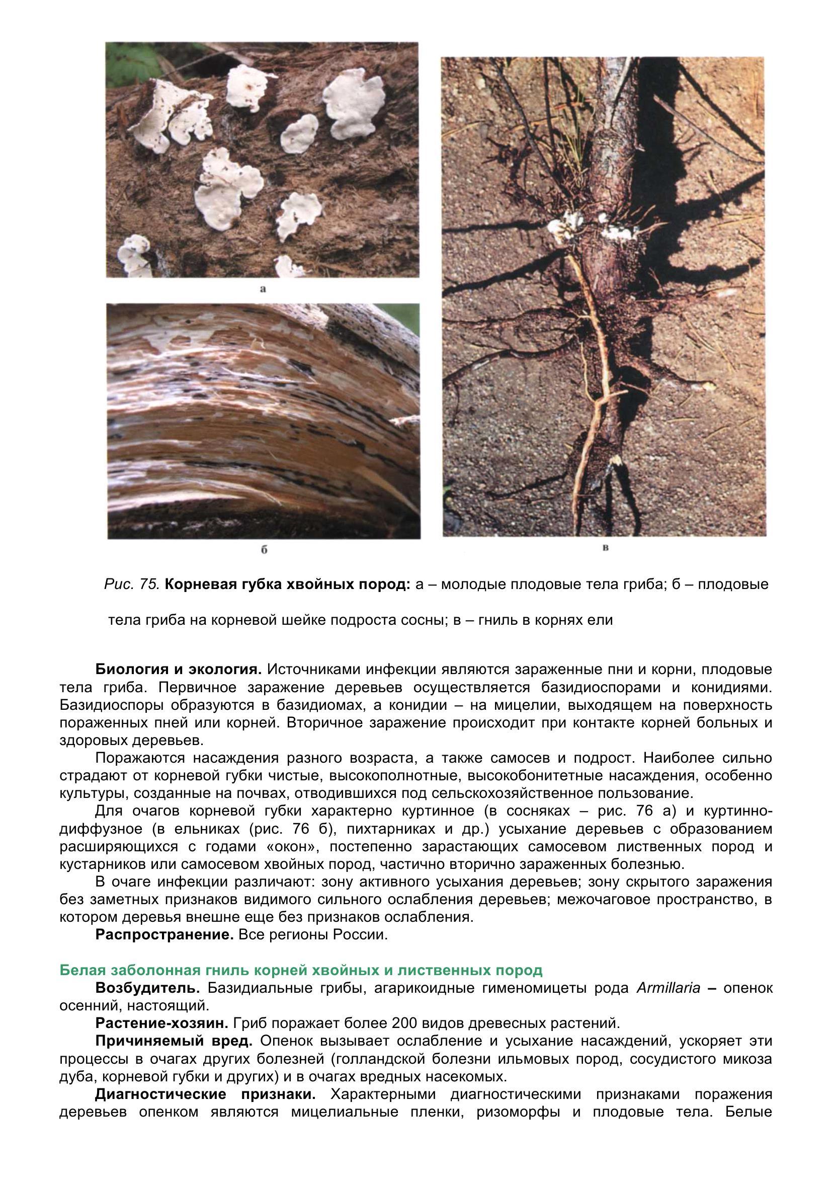 Болезни_древесных_растений_088.jpg