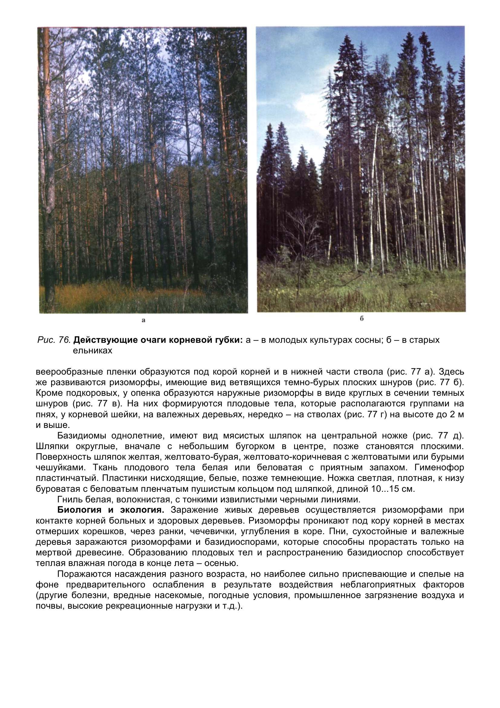 Болезни_древесных_растений_089.jpg