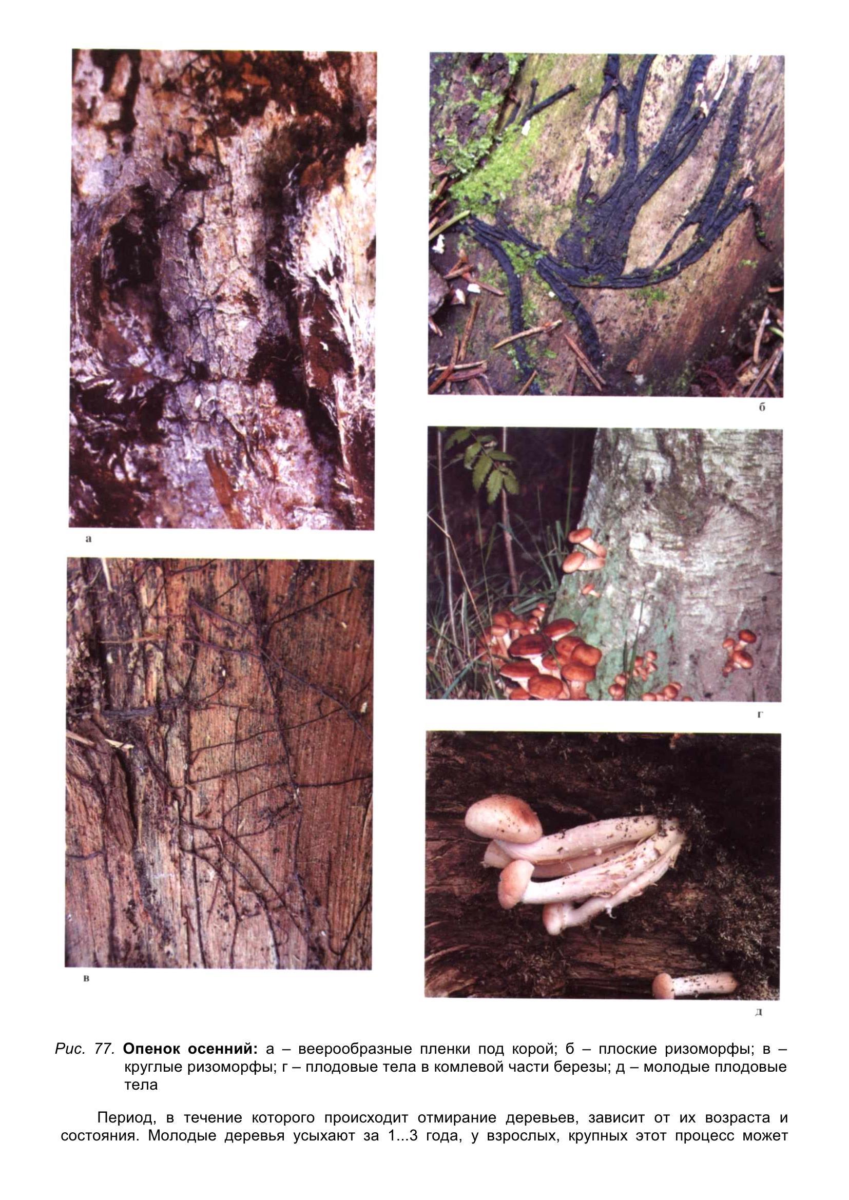 Болезни_древесных_растений_090.jpg